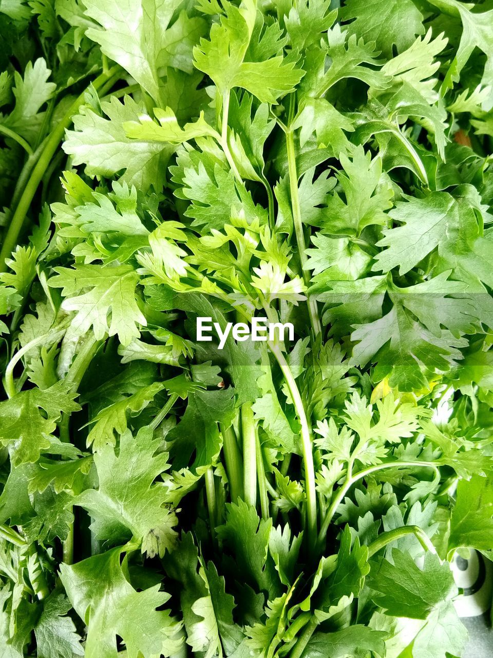 green color, food and drink, freshness, wellbeing, food, vegetable, healthy eating, leaf, plant part, no people, full frame, close-up, backgrounds, plant, raw food, nature, high angle view, day, growth, lettuce, herb, leaves, vegetarian food