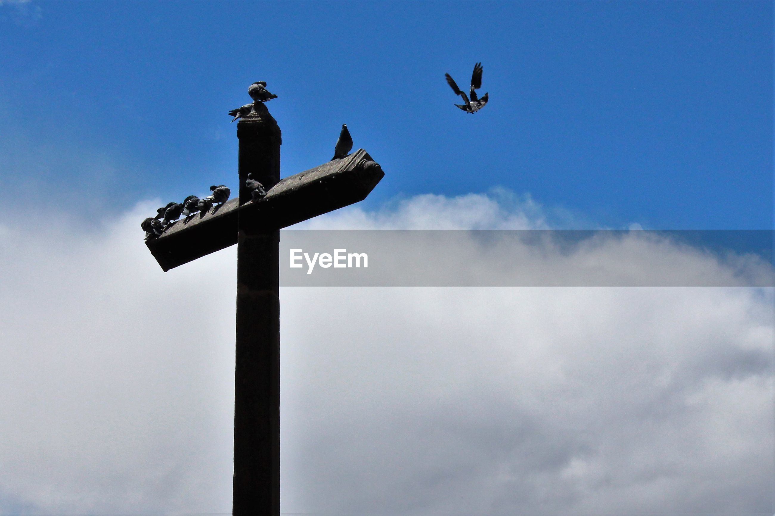Low angle view of bird perching on cross against sky
