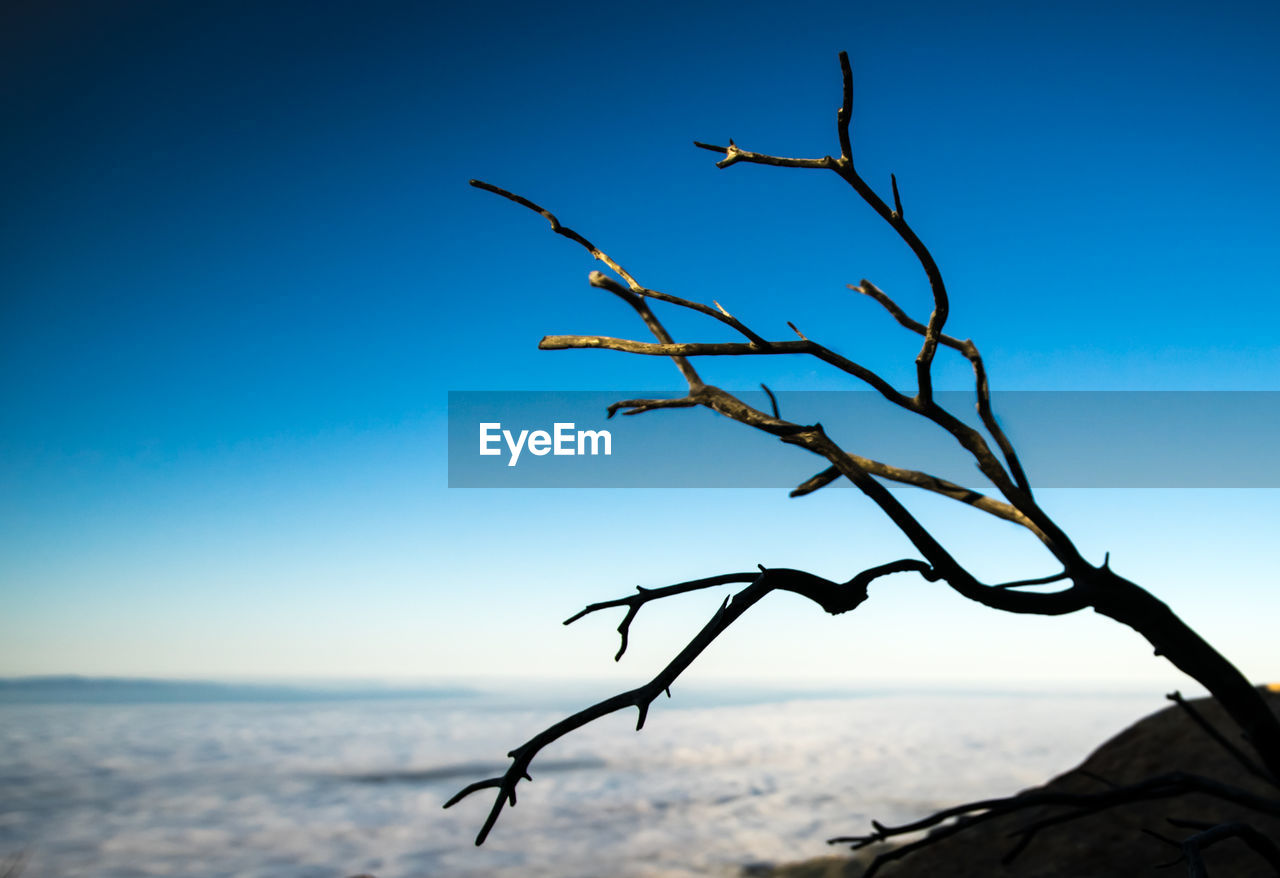 nature, blue, outdoors, beauty in nature, sky, no people, tranquility, clear sky, sea, day, branch, water, tree, close-up