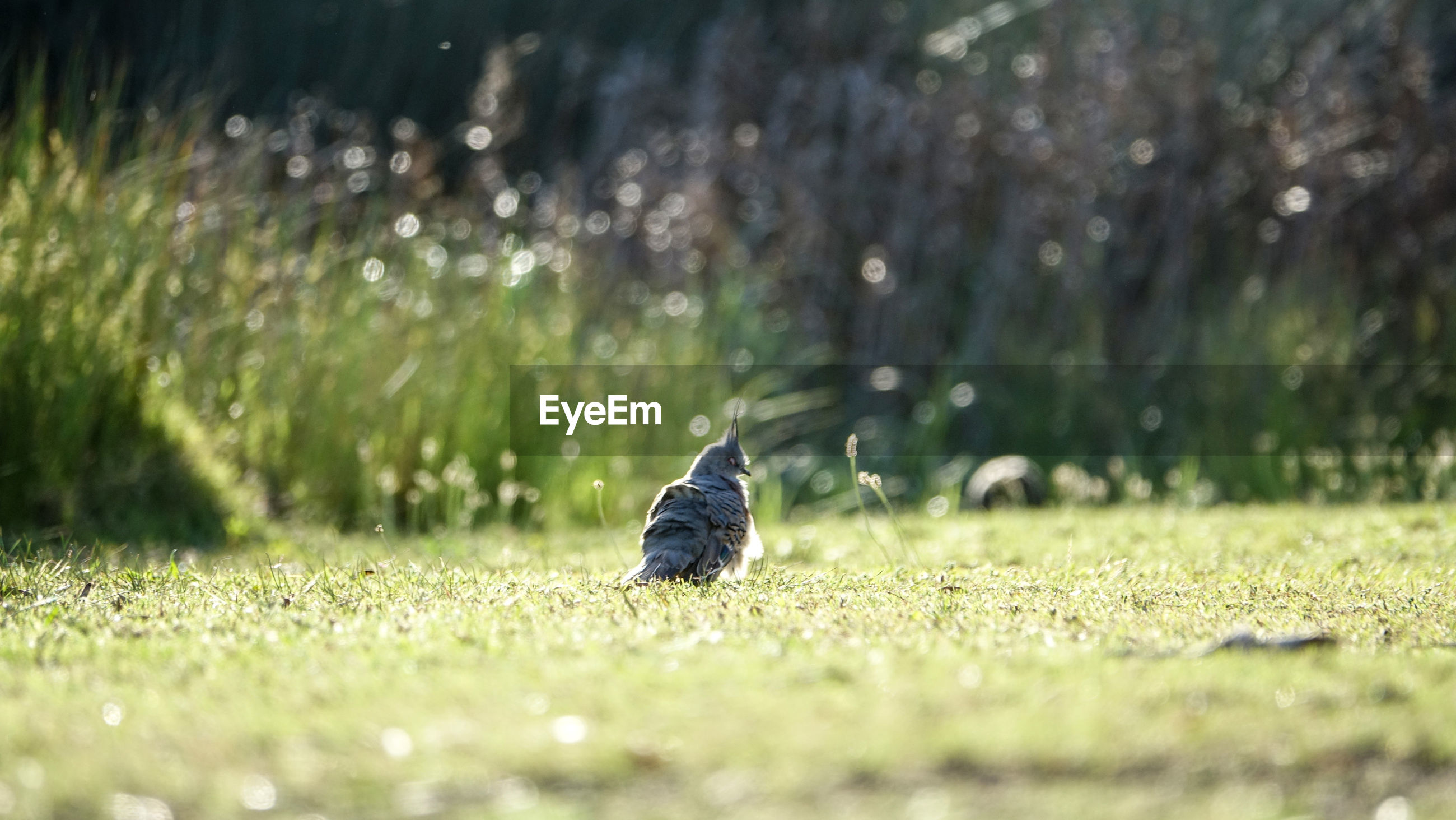 Close-up of bird perching on grassy field