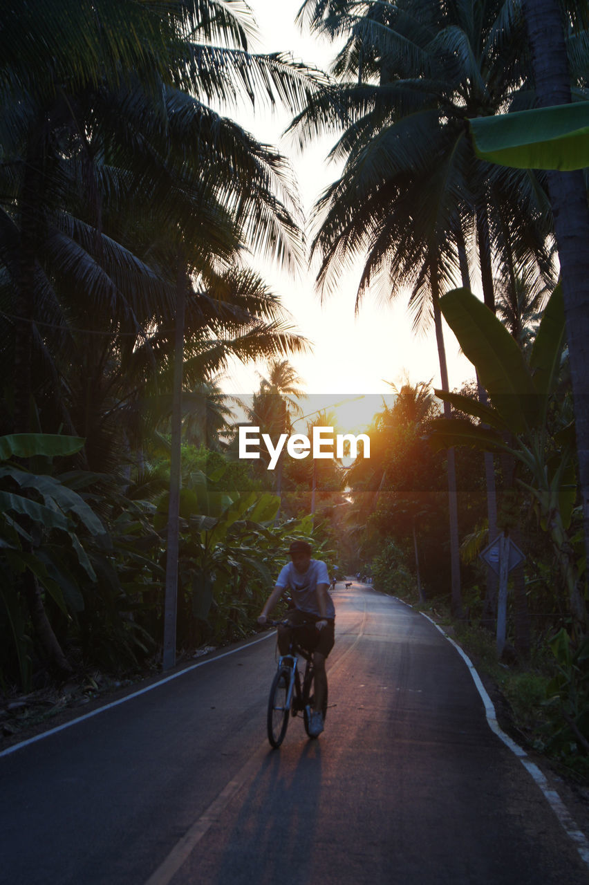 transportation, tree, bicycle, plant, the way forward, direction, road, land vehicle, ride, real people, nature, mode of transportation, lifestyles, riding, palm tree, sunlight, leisure activity, tropical climate, sunset, people, outdoors, sun, diminishing perspective