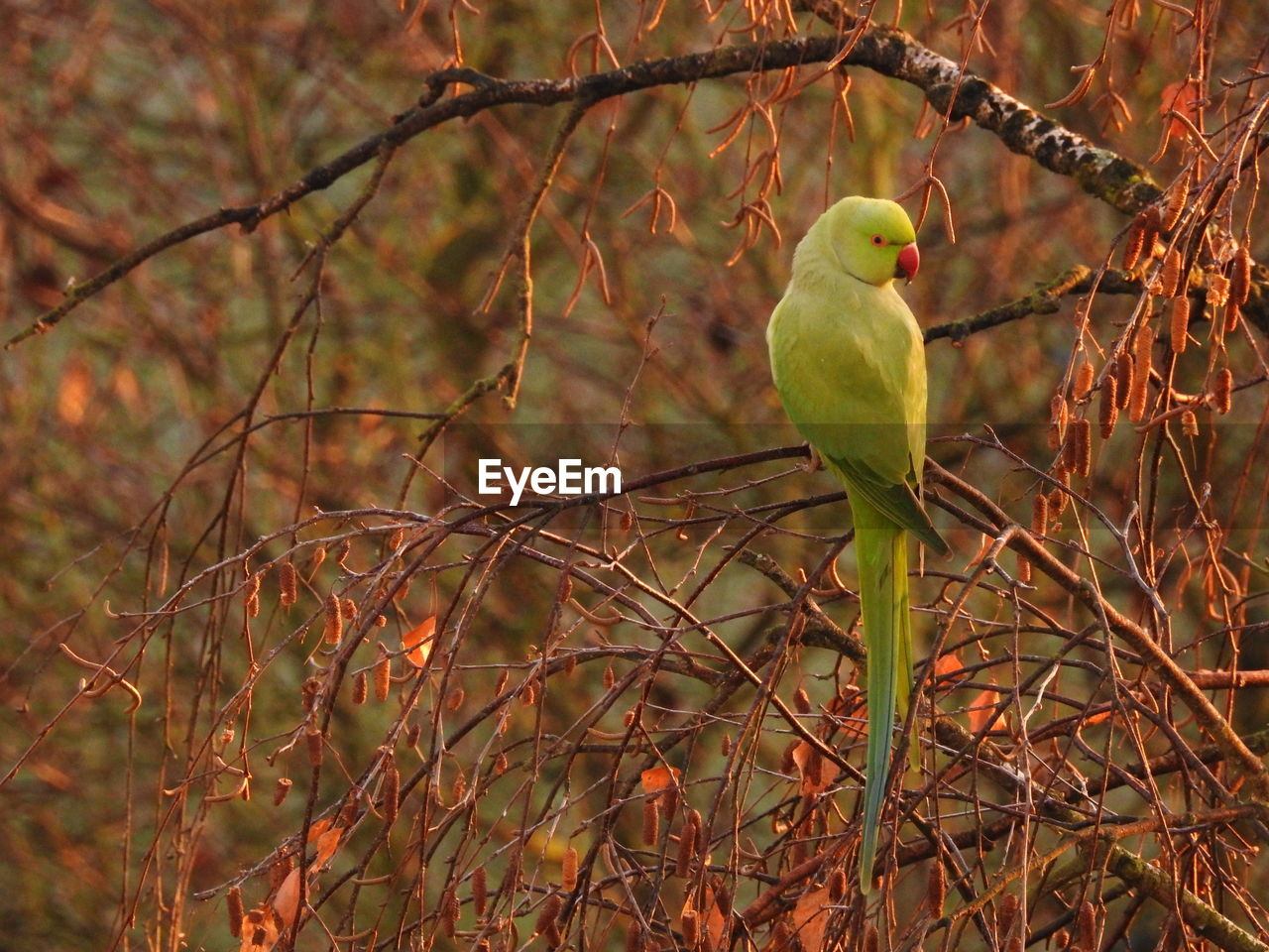 bird, vertebrate, animal themes, animal wildlife, animal, animals in the wild, perching, tree, one animal, plant, no people, branch, day, nature, outdoors, focus on foreground, green color, land, forest, selective focus