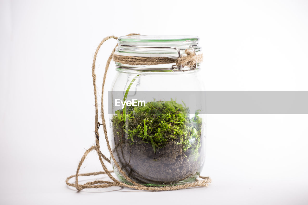 Close-up of moss growing in jar against white background