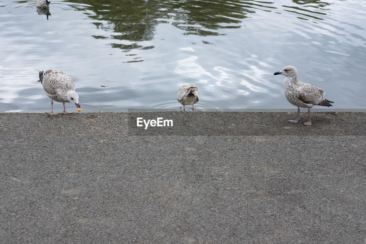 Seagulls perching on shore