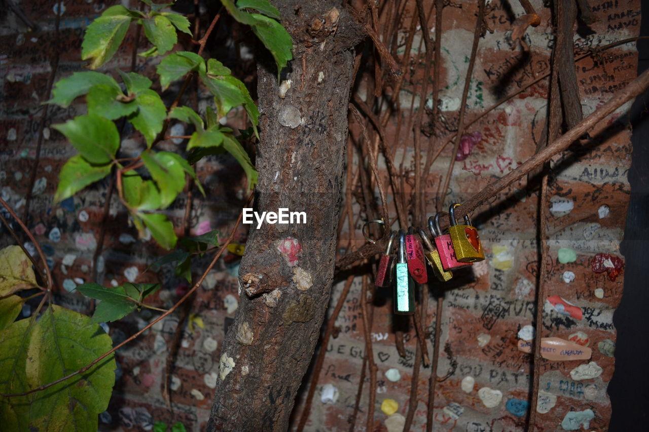 hanging, padlock, day, no people, outdoors, tree, close-up