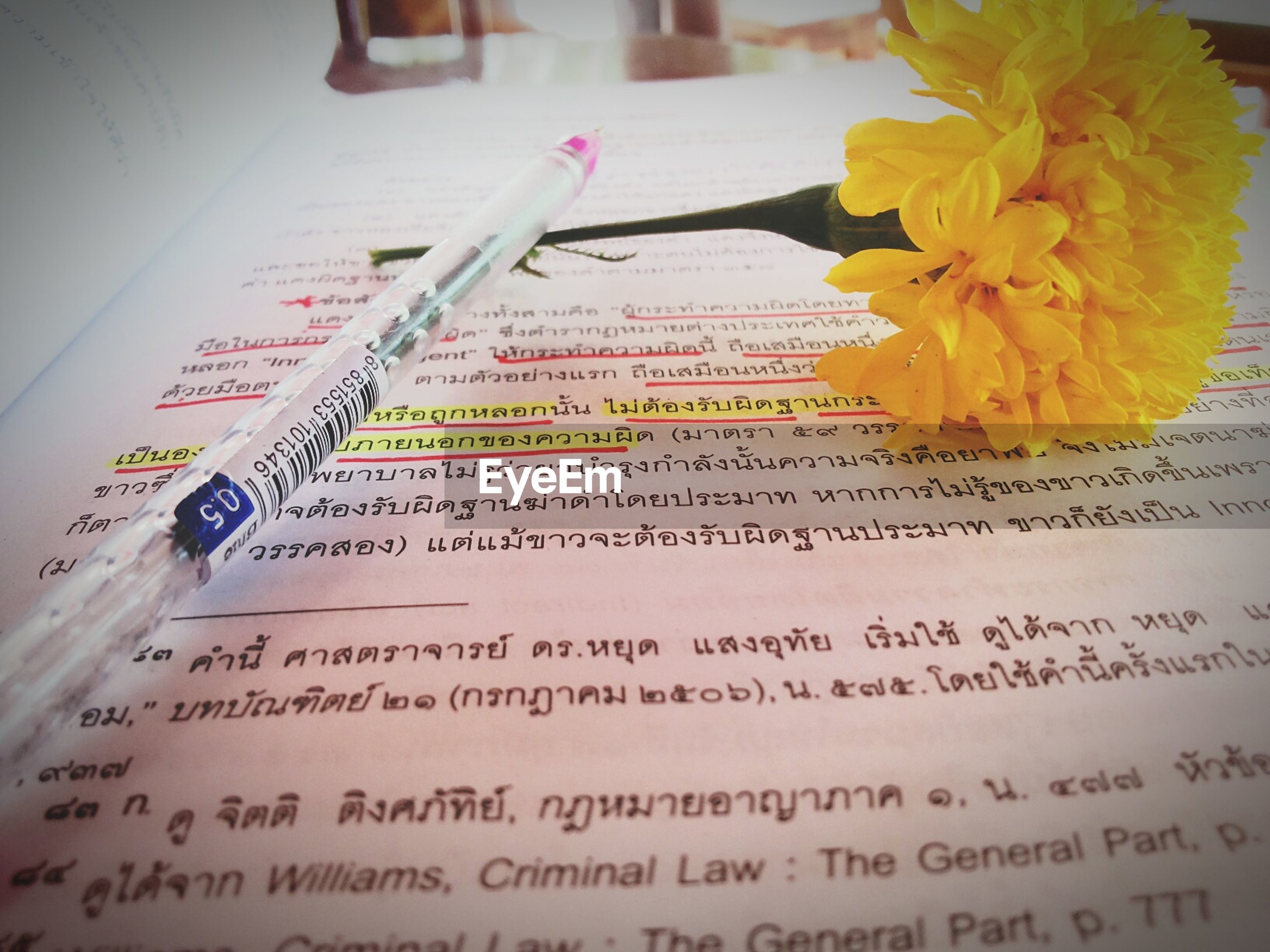 indoors, close-up, flower, book, paper, text, table, still life, yellow, education, freshness, communication, western script, no people, selective focus, high angle view, focus on foreground, cropped, pen, open
