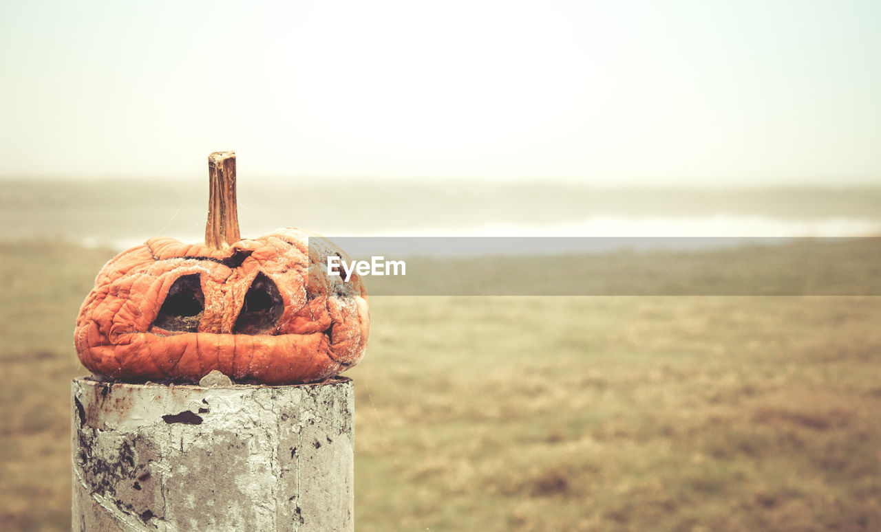 Rotten Pumpkin On Wooden Post Over Field During Foggy Weather
