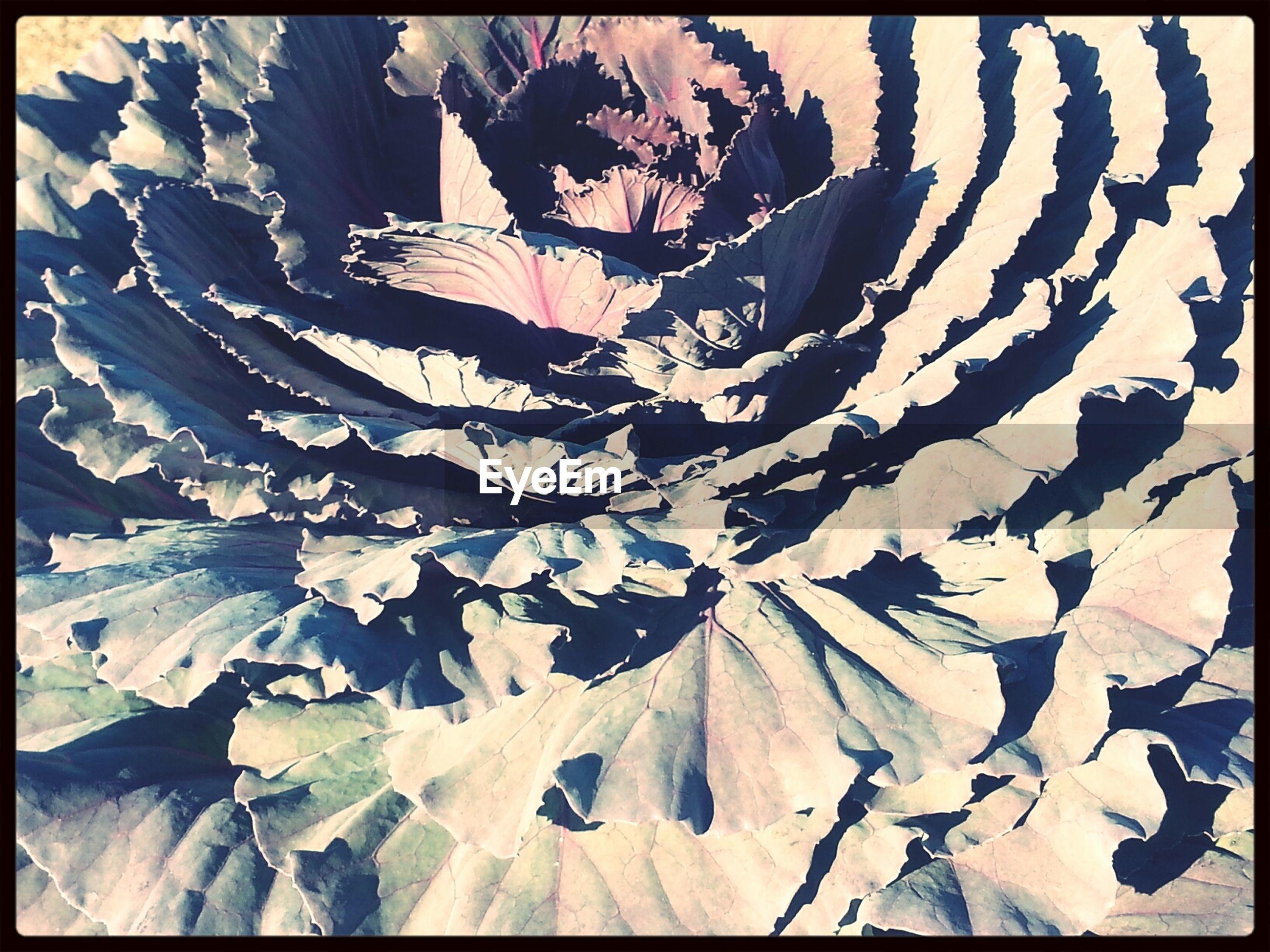 Full frame shot of plants on sunny day