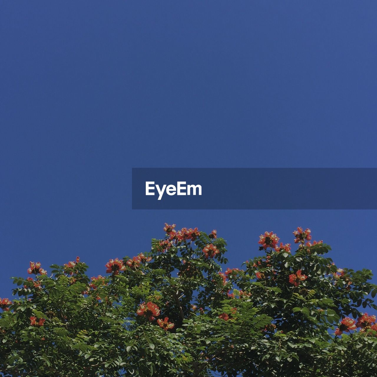 growth, nature, tree, clear sky, blue, beauty in nature, no people, low angle view, copy space, flower, day, freshness, outdoors, fruit, plant, fragility, sky