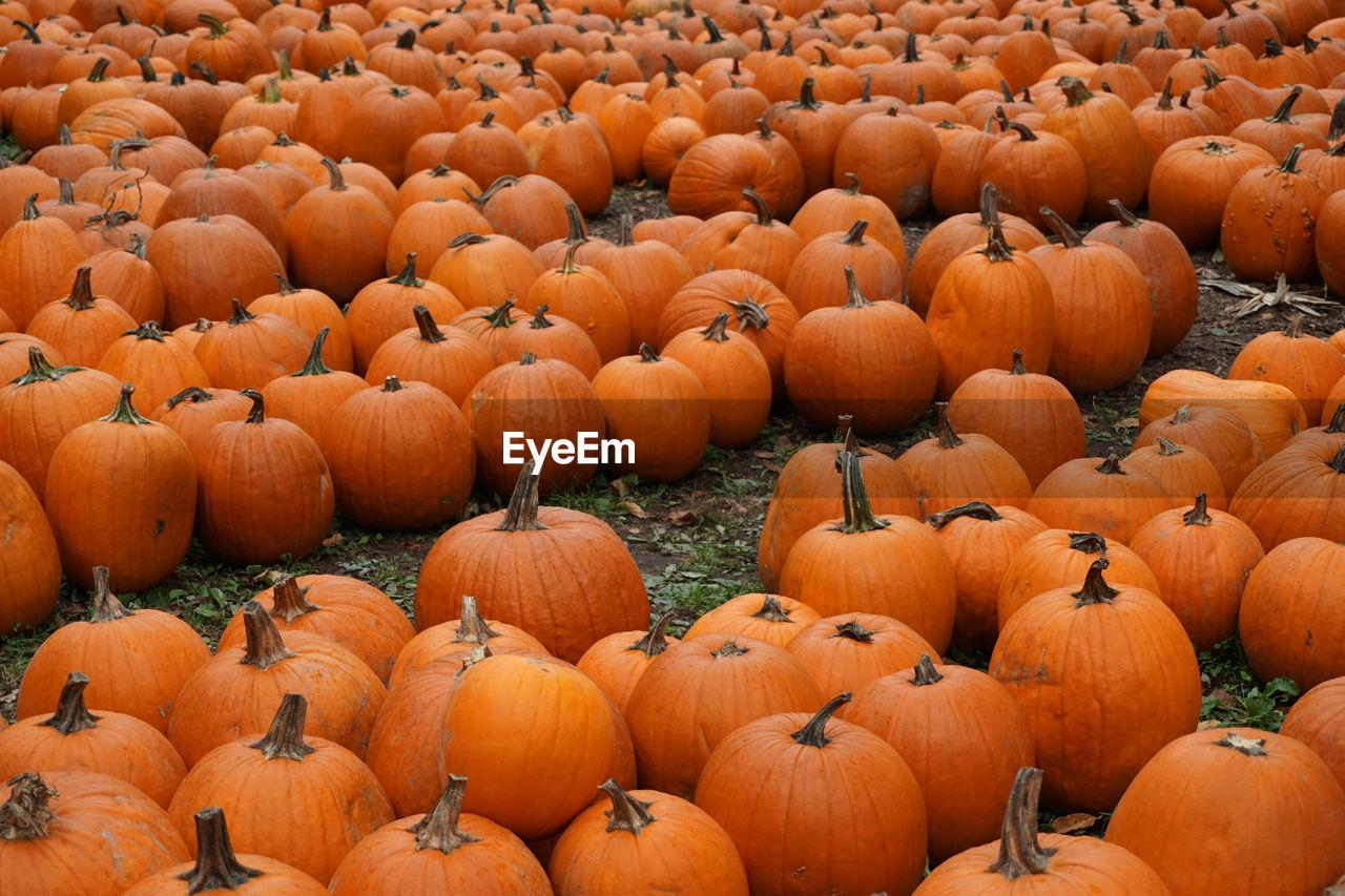 Full Frame Shot Of Pumpkins On Field