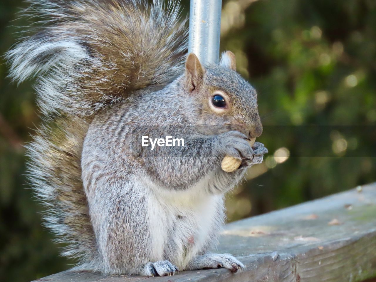 animal themes, animal, one animal, animal wildlife, animals in the wild, mammal, rodent, squirrel, close-up, vertebrate, focus on foreground, day, no people, nature, eating, outdoors, animal body part, zoology, looking, food, animal head, whisker, herbivorous