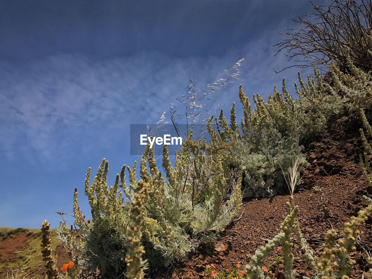 LOW ANGLE VIEW OF FRESH CACTUS PLANTS AGAINST SKY