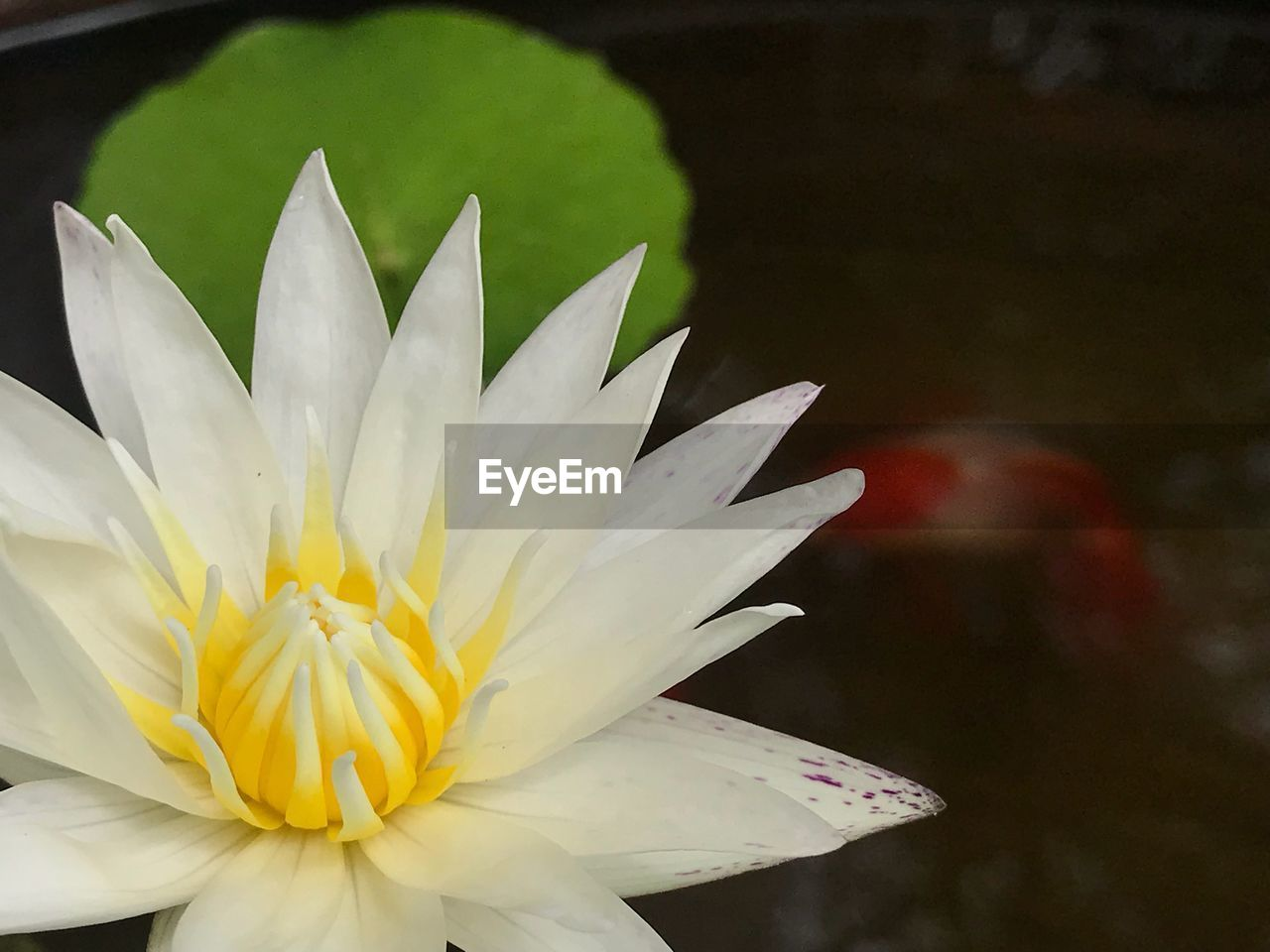flower, flowering plant, freshness, petal, vulnerability, fragility, beauty in nature, plant, flower head, inflorescence, close-up, white color, growth, focus on foreground, nature, no people, day, yellow, pollen