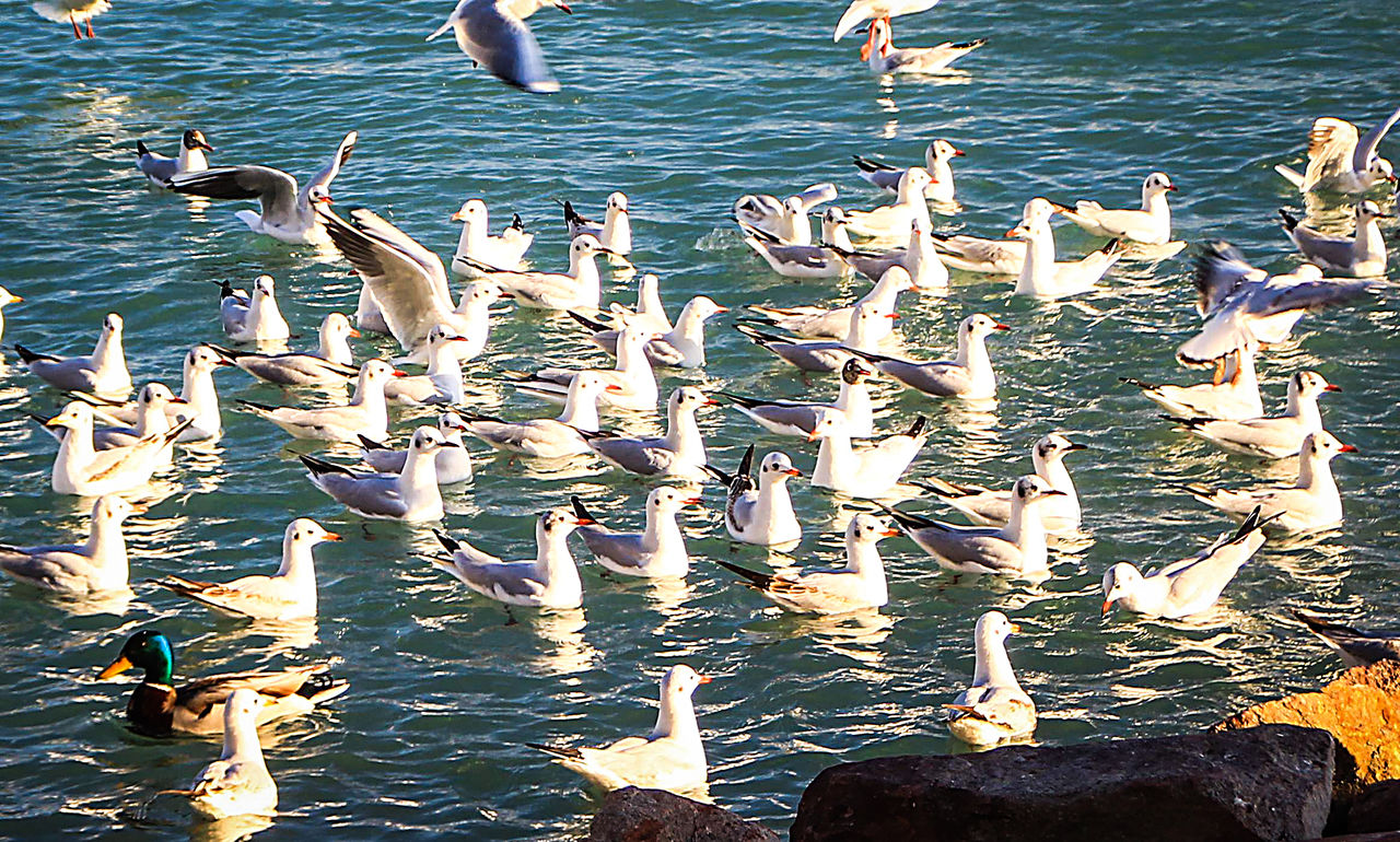 large group of animals, nature, water, animals in the wild, no people, lake, day, outdoors, animal themes, food, beauty in nature, bird