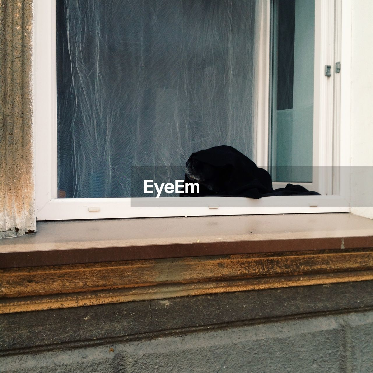 BLACK DOG LOOKING THROUGH WINDOW
