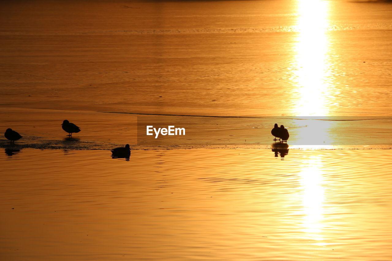 sunset, water, orange color, reflection, sky, beauty in nature, sea, scenics - nature, silhouette, animal themes, animal, vertebrate, bird, idyllic, tranquility, nature, group of animals, animal wildlife, tranquil scene, sun, outdoors