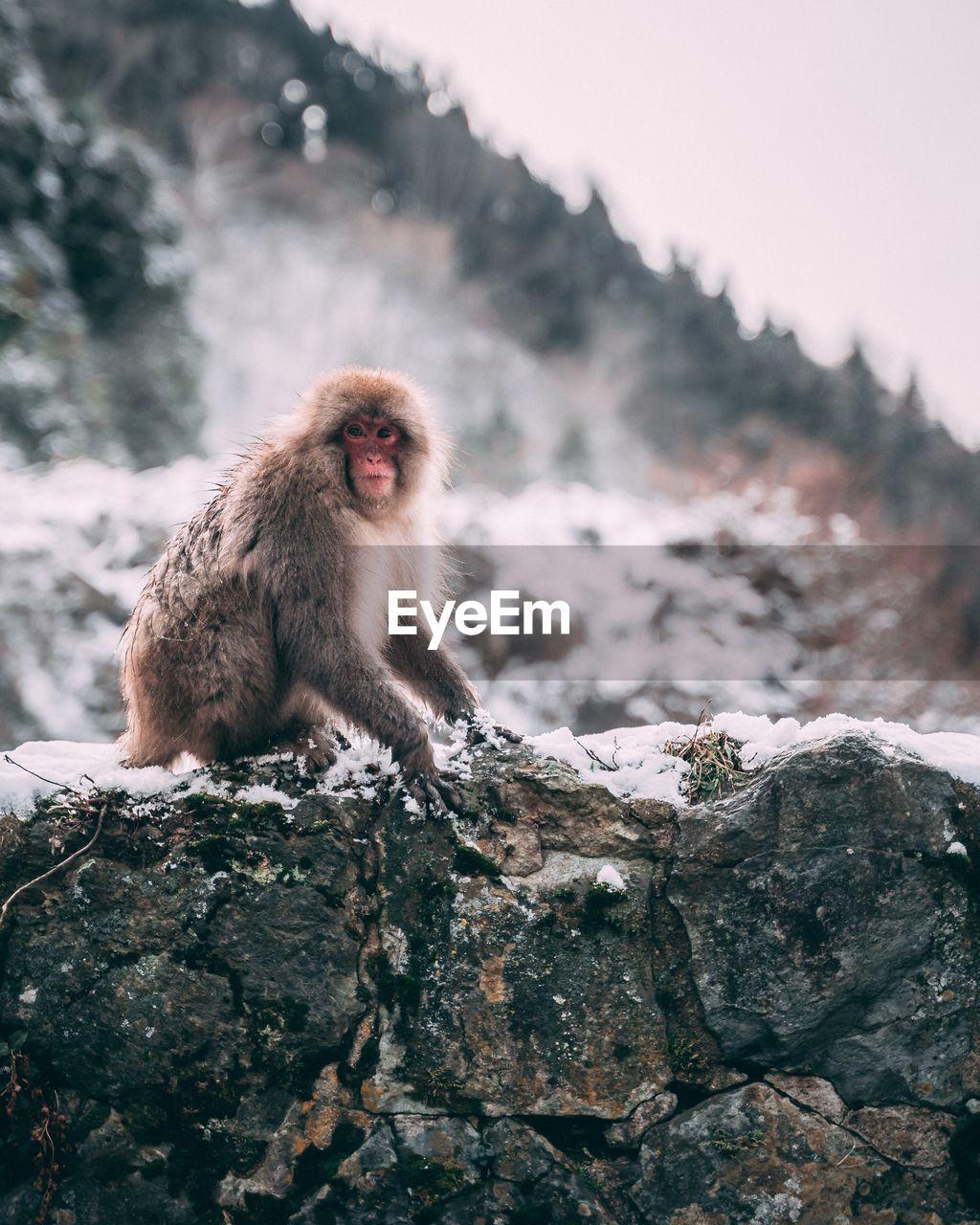 Monkey sitting on mountain during winter