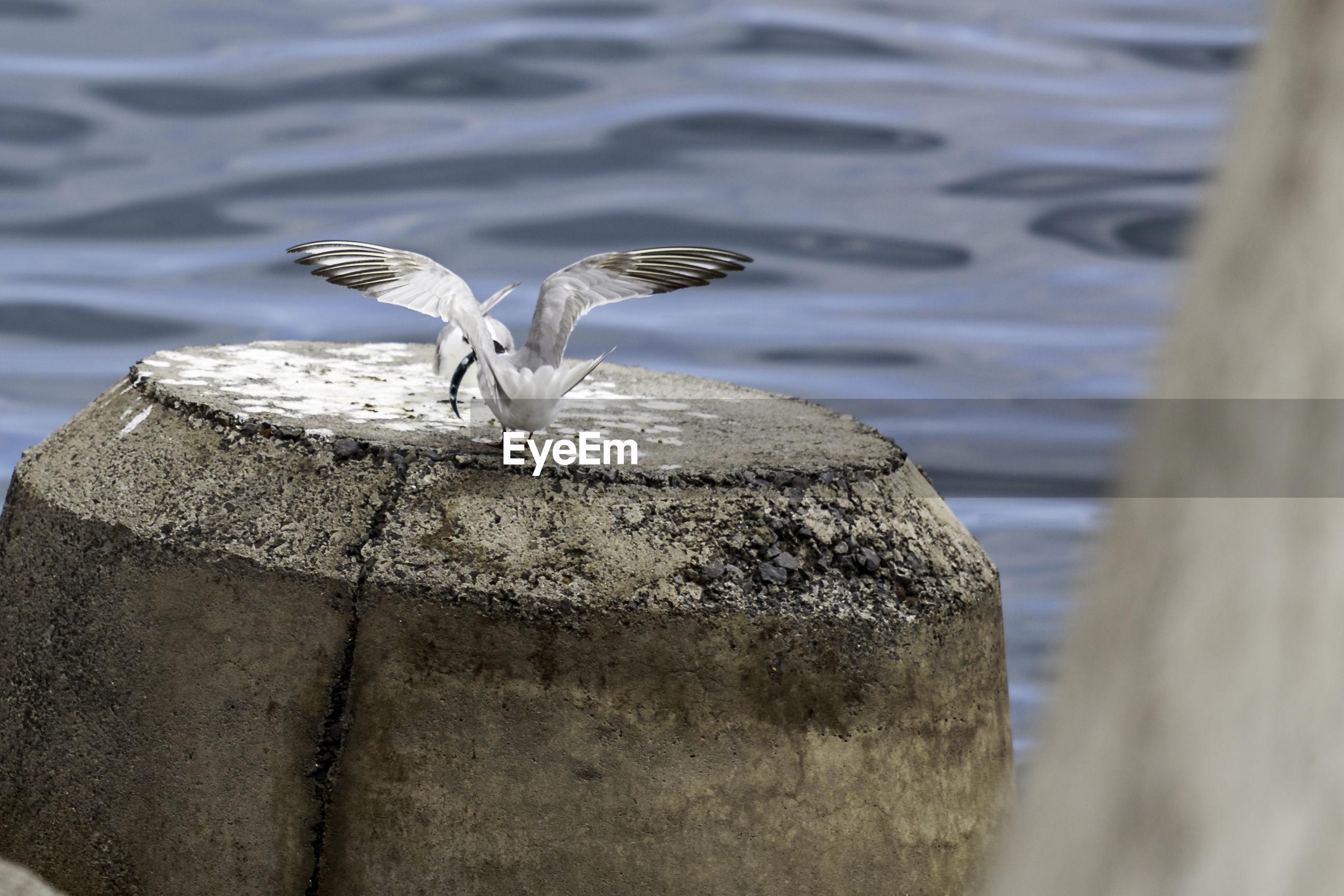 Birds perching by sea on rock