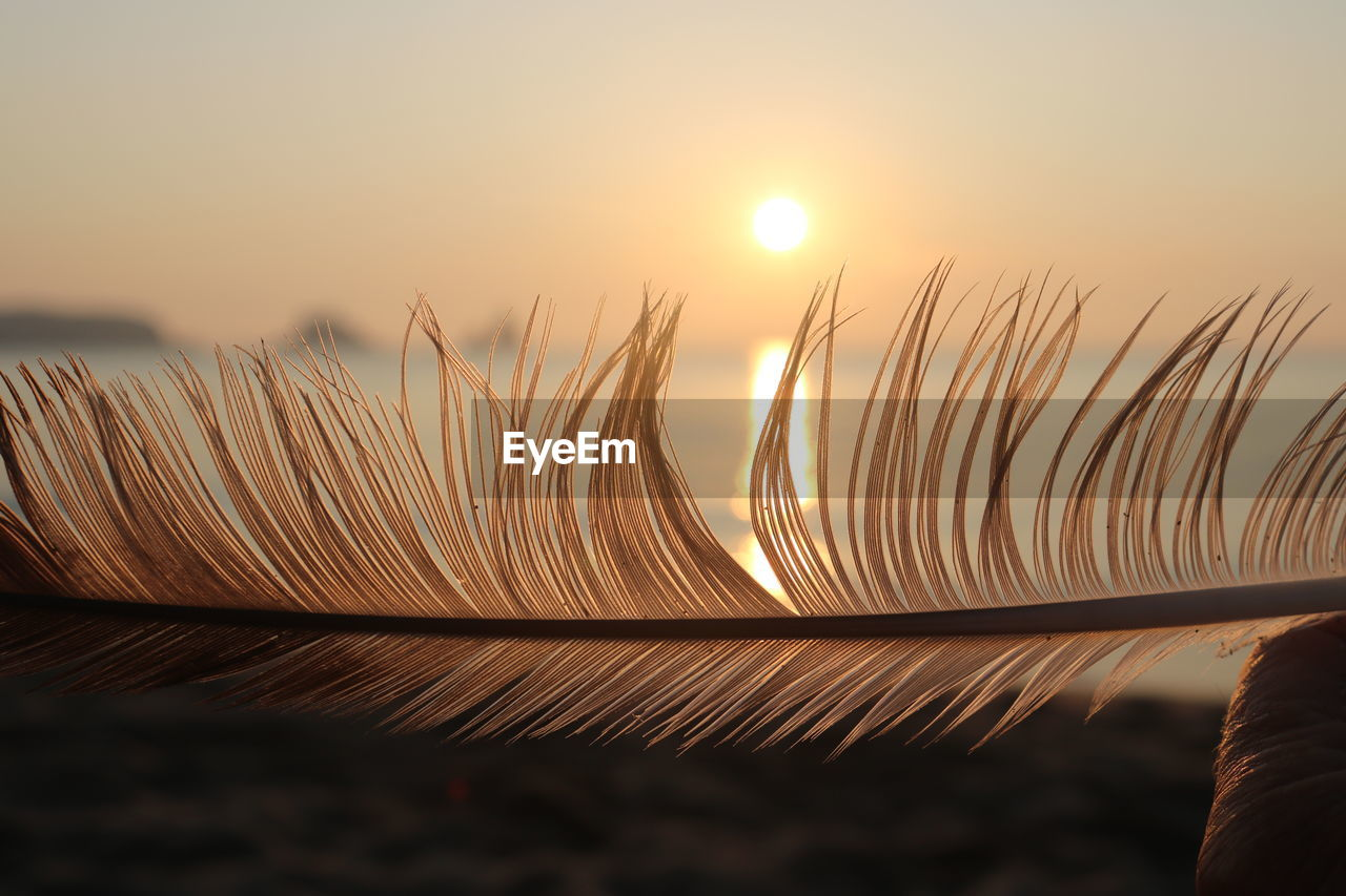 sunset, sky, beauty in nature, sun, close-up, nature, orange color, plant, focus on foreground, sunlight, growth, no people, tranquility, scenics - nature, outdoors, land, tranquil scene, non-urban scene, selective focus, stalk