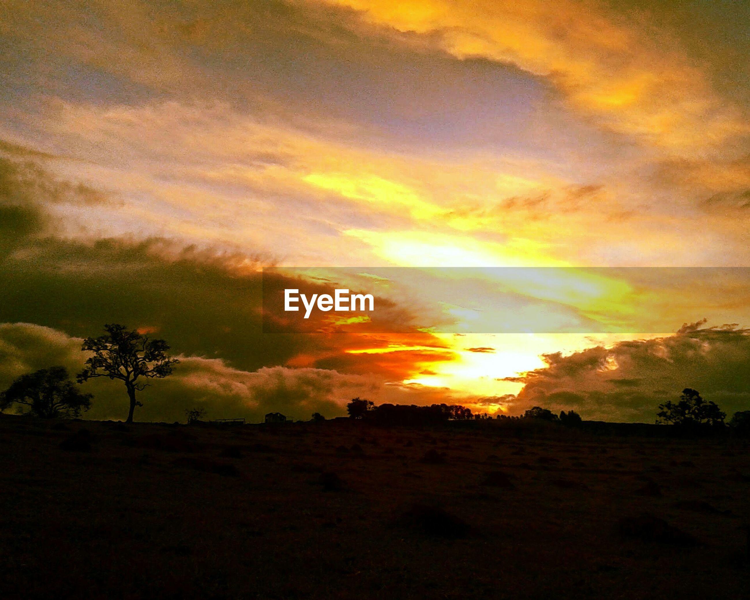 sunset, sky, tranquil scene, scenics, tranquility, silhouette, beauty in nature, cloud - sky, landscape, orange color, nature, idyllic, dramatic sky, cloud, cloudy, field, tree, outdoors, sun, moody sky