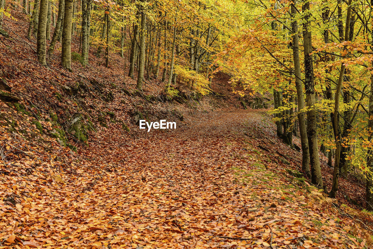 autumn, leaf, forest, nature, change, tree, scenics, beauty in nature, tranquil scene, outdoors, tranquility, landscape, woodland, no people, tree trunk, day, the way forward, single lane road, travel destinations, multi colored, tree area