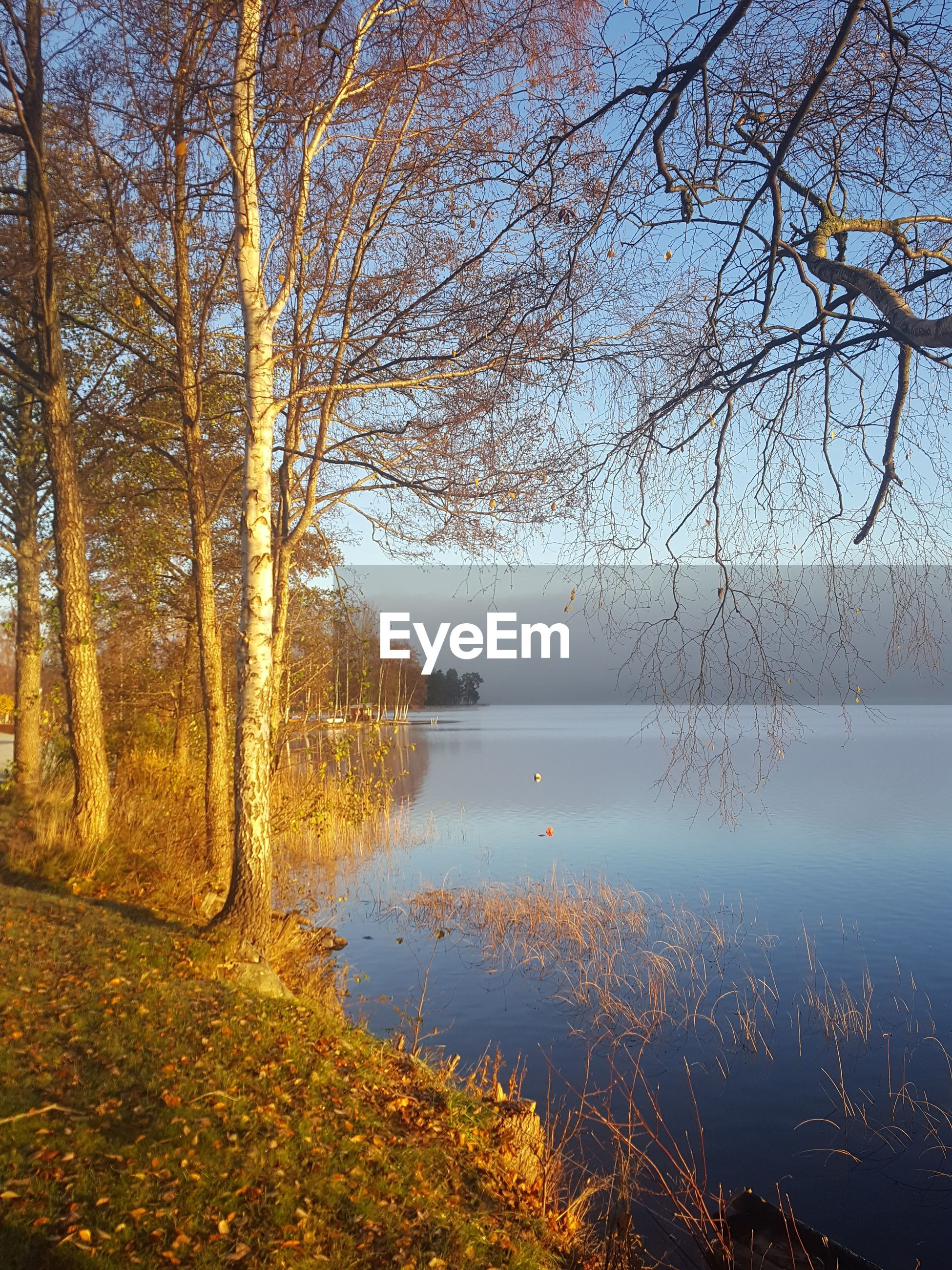 SCENIC VIEW OF LAKE AGAINST TREES DURING AUTUMN