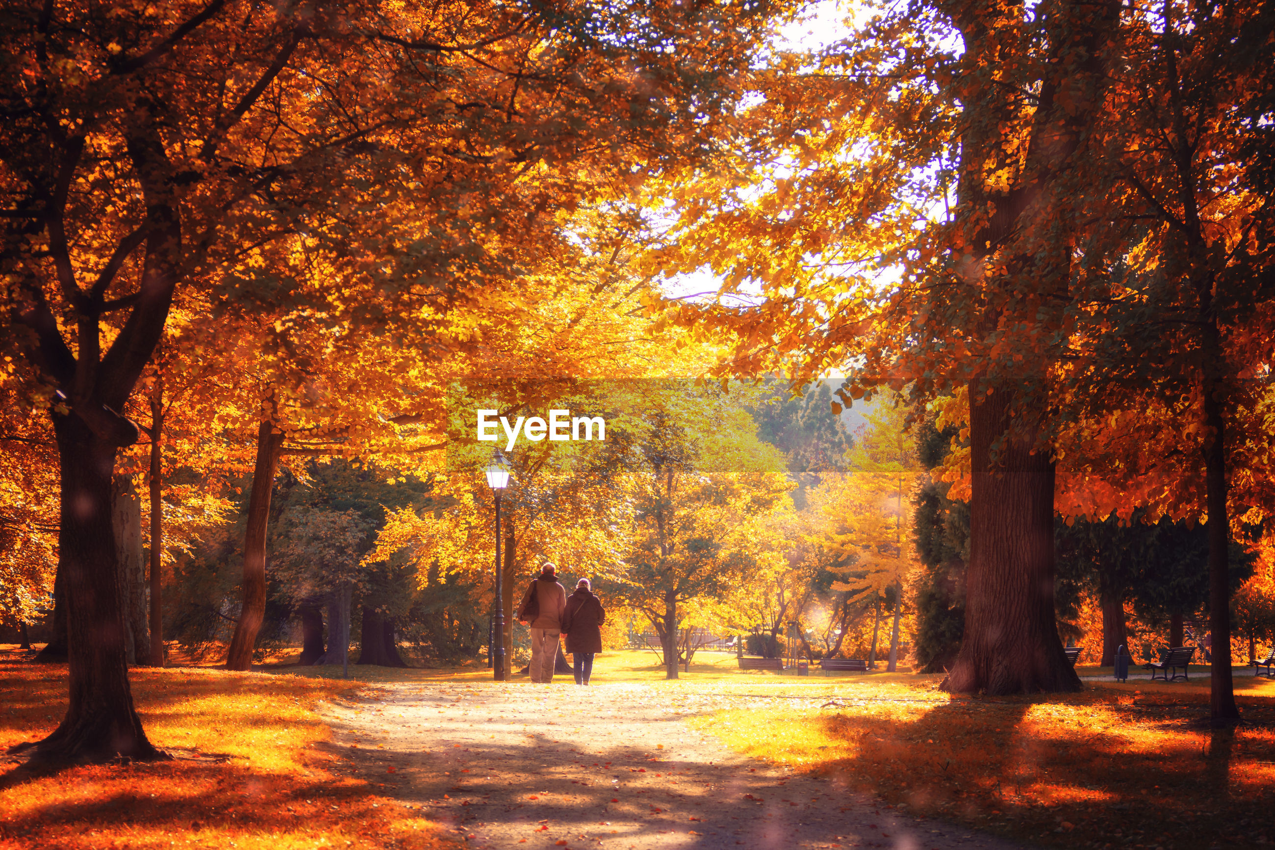 REAR VIEW OF PEOPLE WALKING IN AUTUMN TREES IN PARK