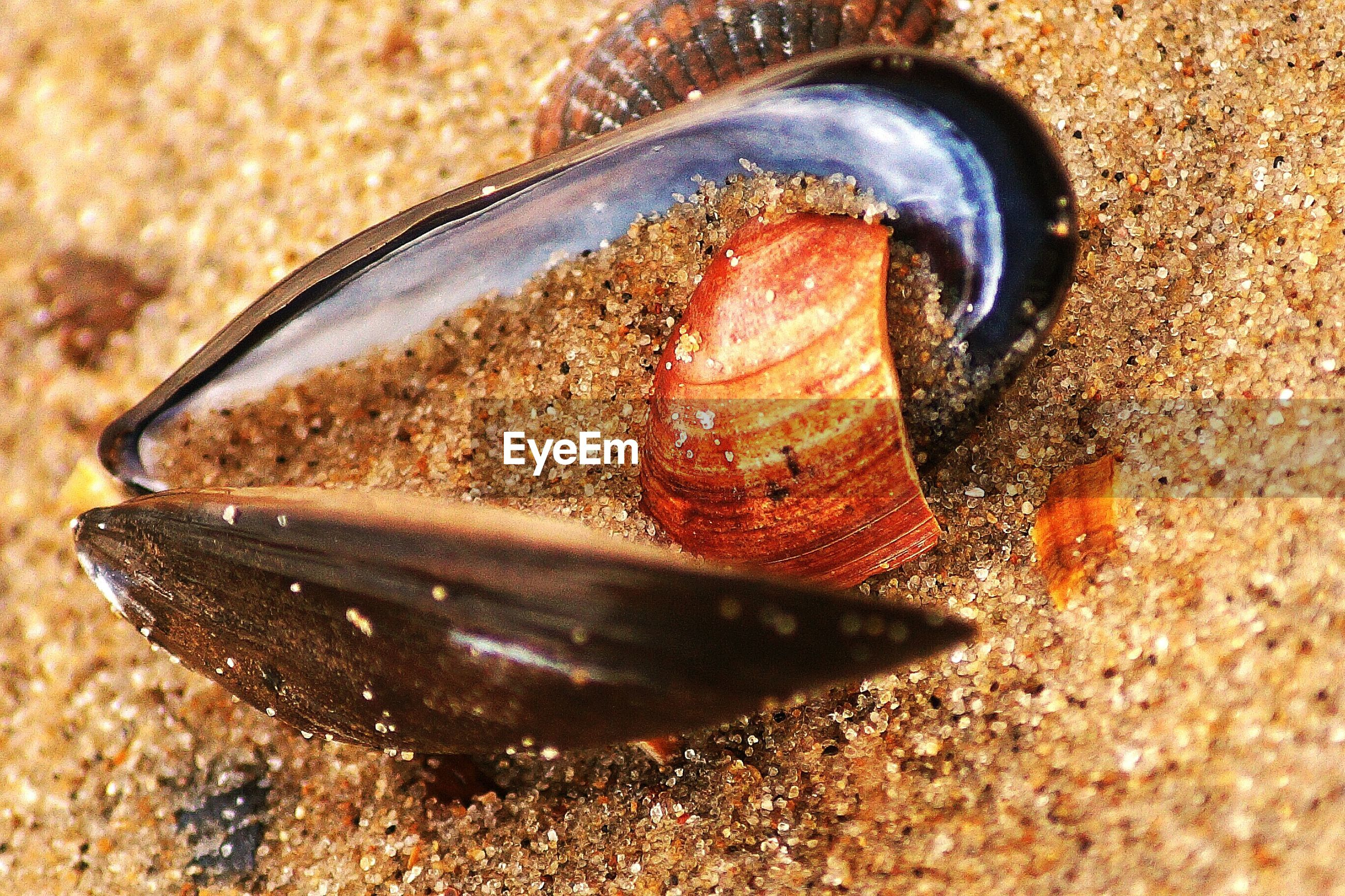 close-up, animal shell, food and drink, snail, one animal, still life, animal themes, shell, focus on foreground, animals in the wild, high angle view, seashell, no people, food, selective focus, single object, sand, day, wildlife, dead animal