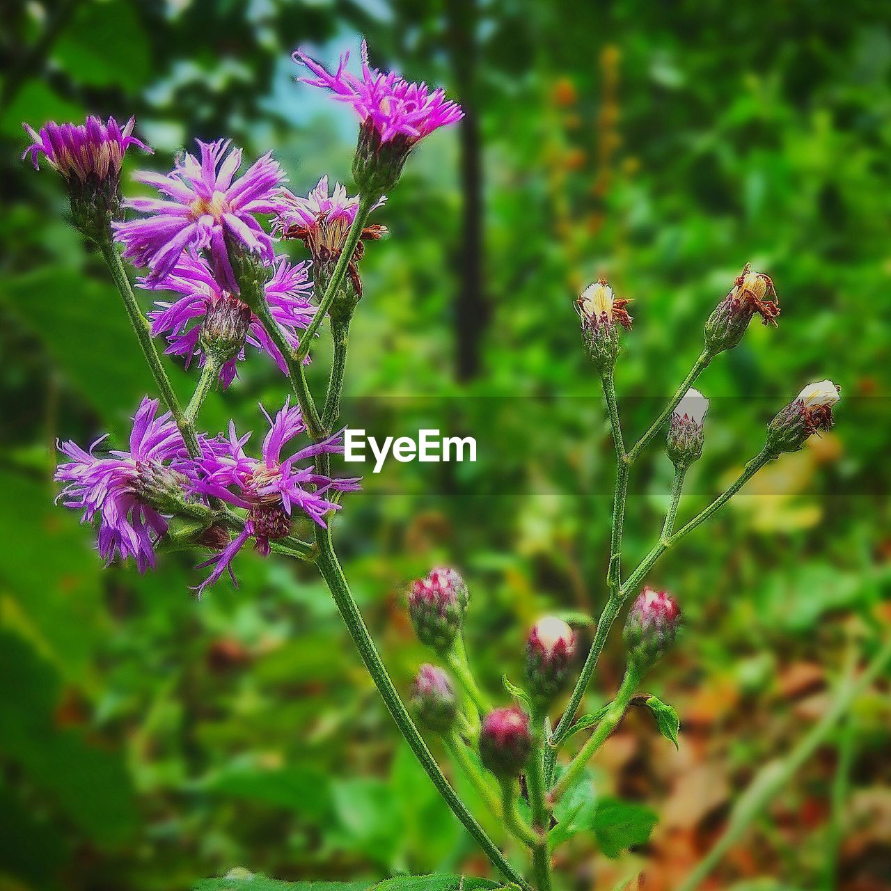 flower, growth, nature, fragility, plant, purple, beauty in nature, day, freshness, outdoors, no people, petal, flower head, focus on foreground, close-up
