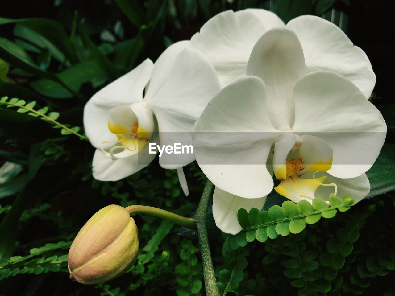 flower, petal, growth, beauty in nature, flower head, fragility, nature, freshness, plant, white color, blooming, no people, close-up, outdoors, leaf, day, frangipani