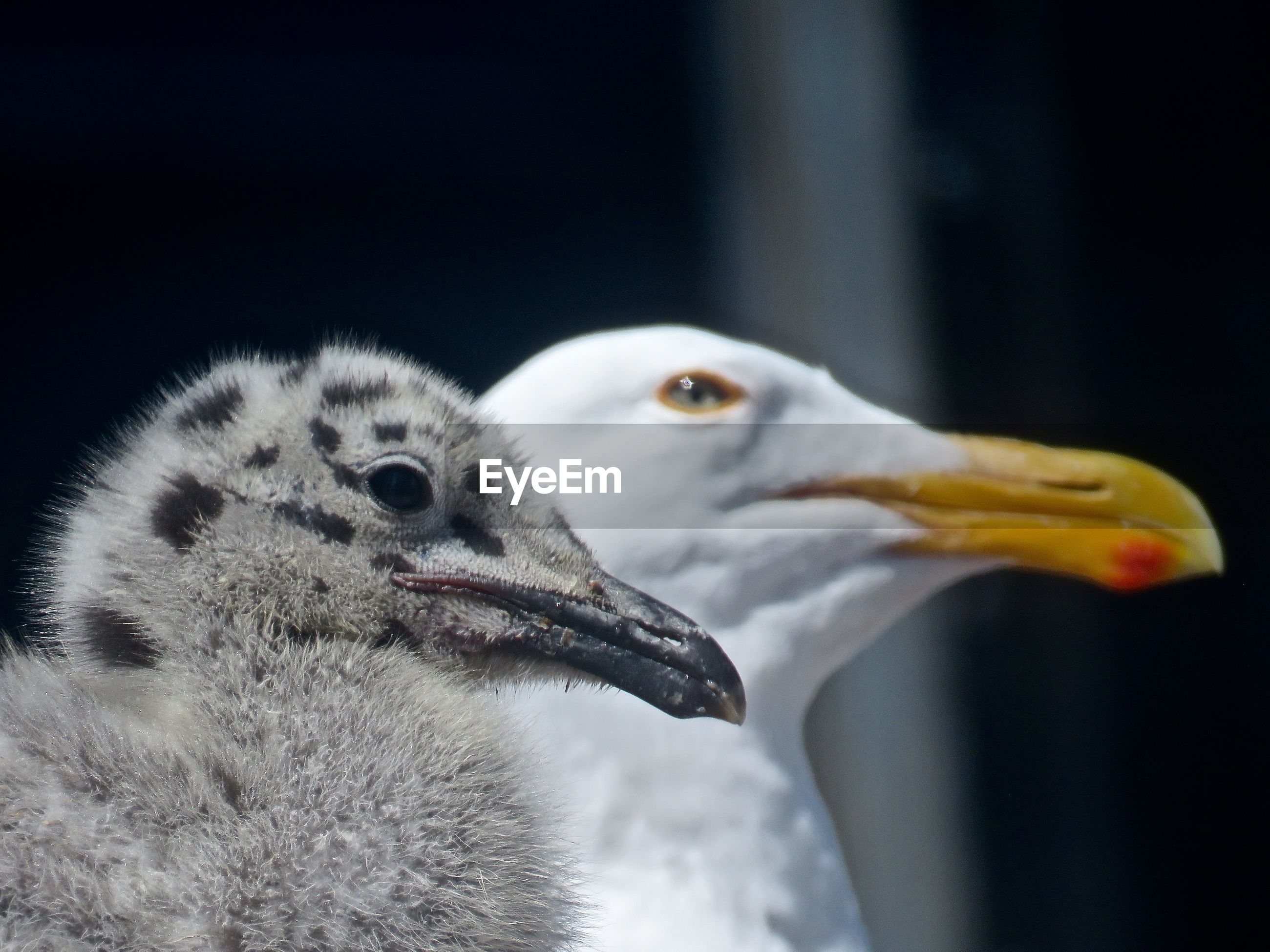 Close-up of seagulls perching outdoors