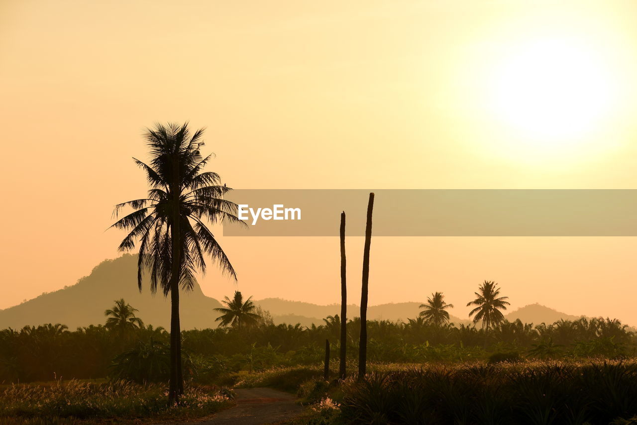 sunset, plant, tropical climate, palm tree, beauty in nature, sky, scenics - nature, tree, orange color, tranquil scene, tranquility, growth, silhouette, nature, no people, land, sun, non-urban scene, idyllic, landscape, coconut palm tree, outdoors, tropical tree