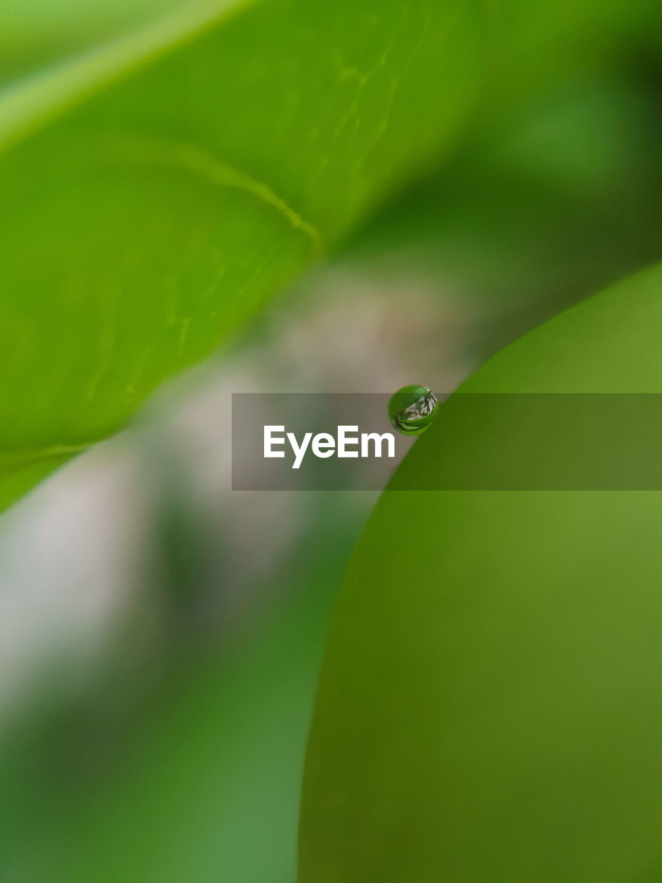 green color, drop, close-up, leaf, plant part, plant, water, nature, no people, wet, selective focus, day, growth, beauty in nature, focus on foreground, outdoors, vulnerability, freshness, purity, dew, raindrop