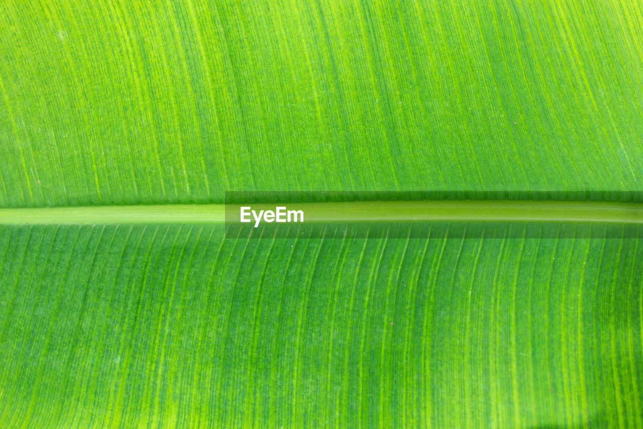 green color, backgrounds, full frame, leaf, pattern, no people, close-up, textured, plant part, plant, freshness, nature, banana leaf, beauty in nature, growth, abstract, natural pattern, leaves, leaf vein, extreme close-up, palm leaf, abstract backgrounds, textured effect