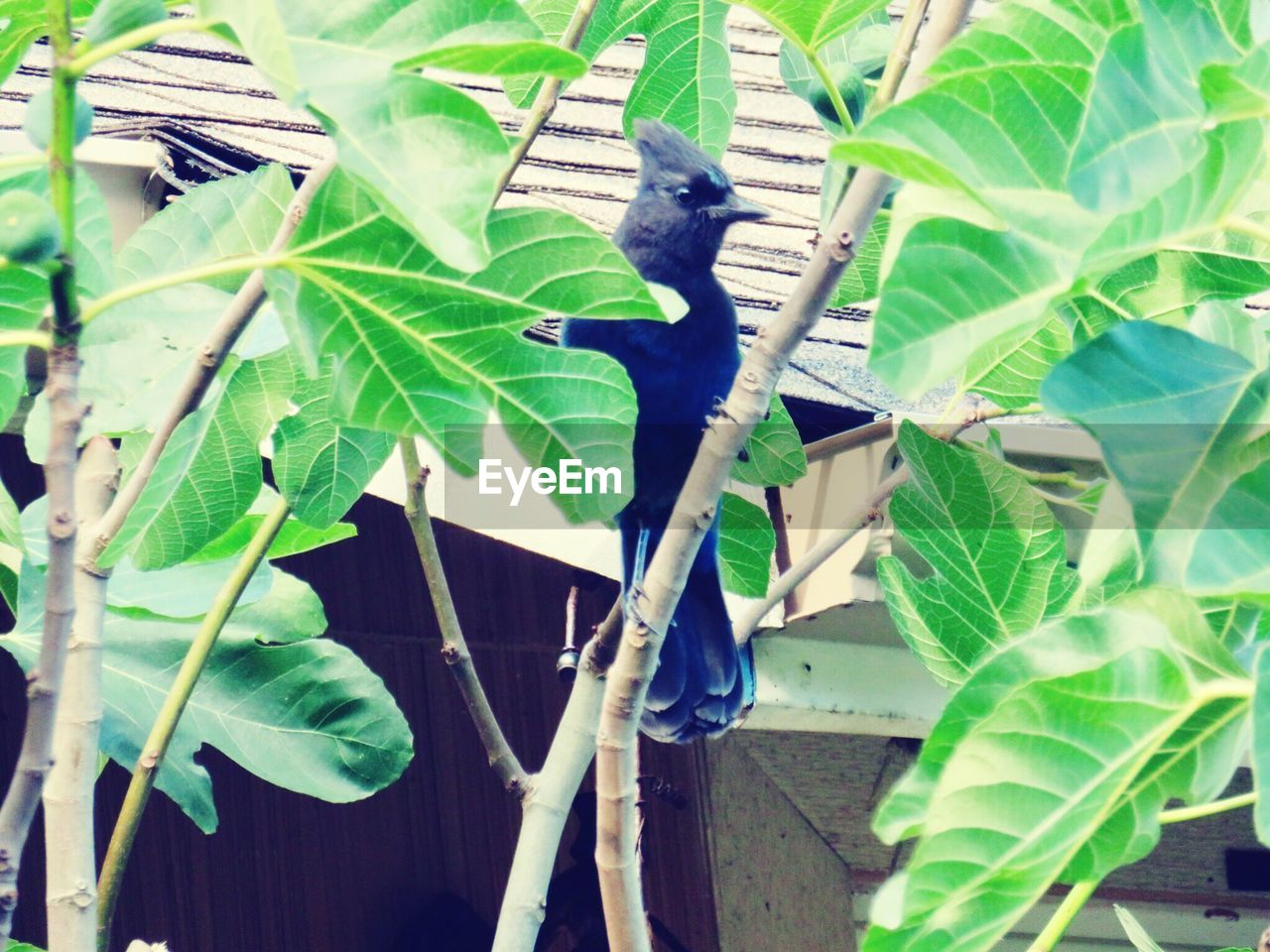 leaf, animals in the wild, one animal, animal themes, green color, bird, perching, growth, plant, nature, no people, animal wildlife, day, outdoors, banana tree, beauty in nature, close-up, spread wings