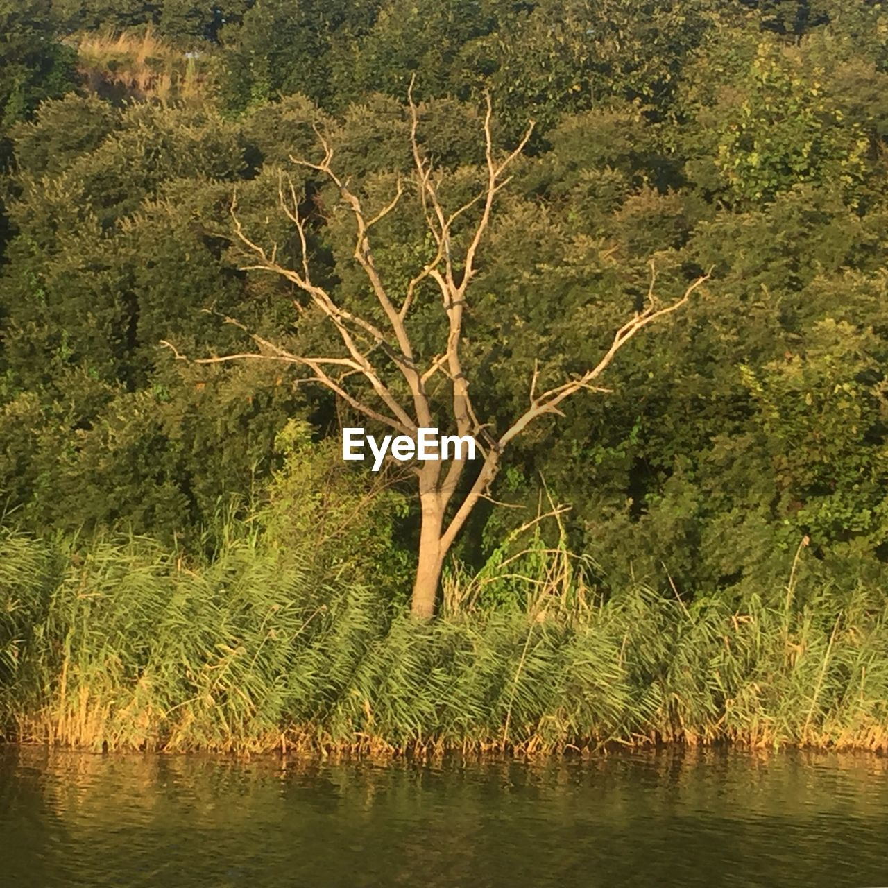 plant, tree, water, nature, tranquility, growth, beauty in nature, lake, no people, scenics - nature, forest, non-urban scene, day, outdoors, tranquil scene, land, green color, waterfront