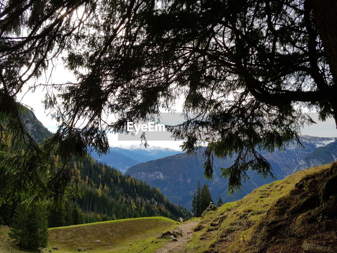 tree, mountain, plant, tranquility, landscape, sky, tranquil scene, nature, scenics - nature, beauty in nature, environment, land, mountain range, non-urban scene, growth, no people, day, green color, idyllic, grass, outdoors, mountain peak