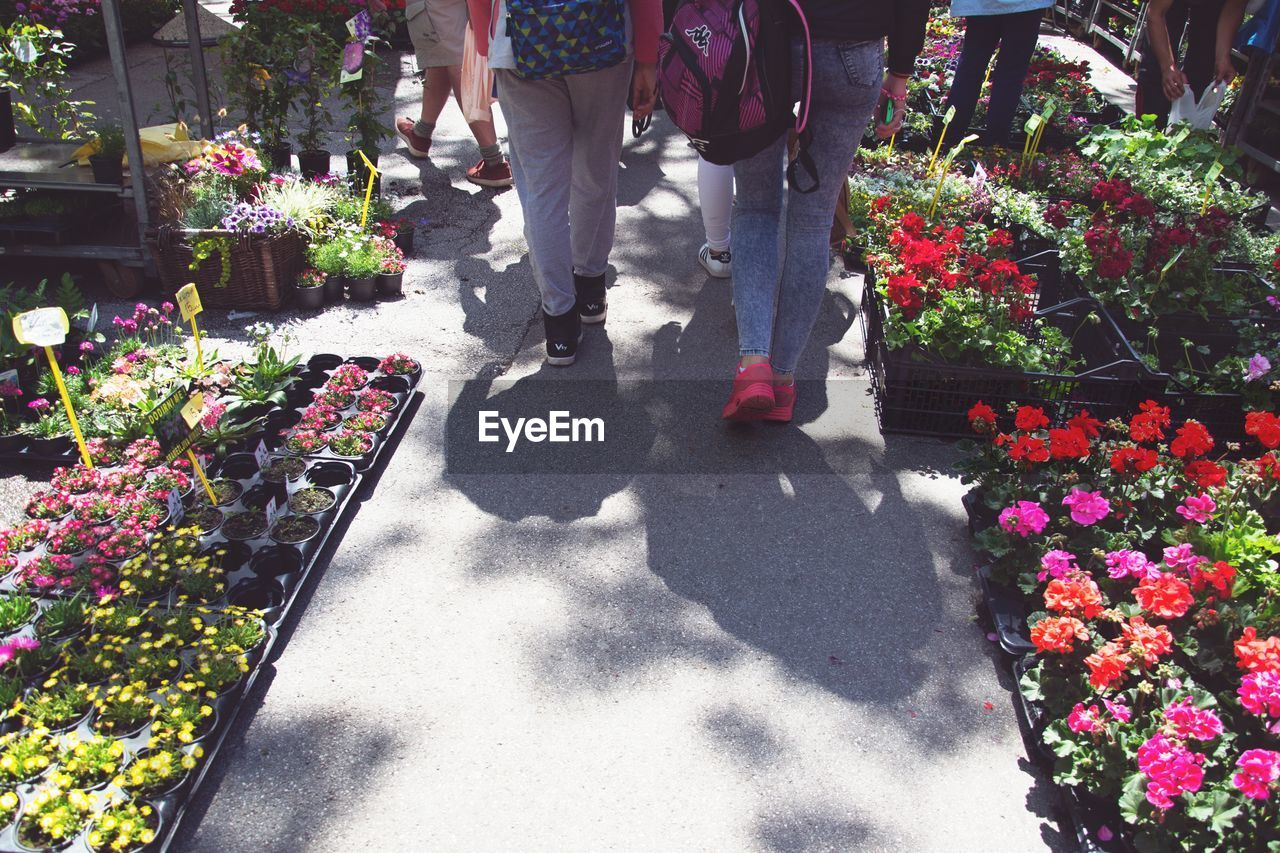 Low Section Of People Walking By Flowering Plants