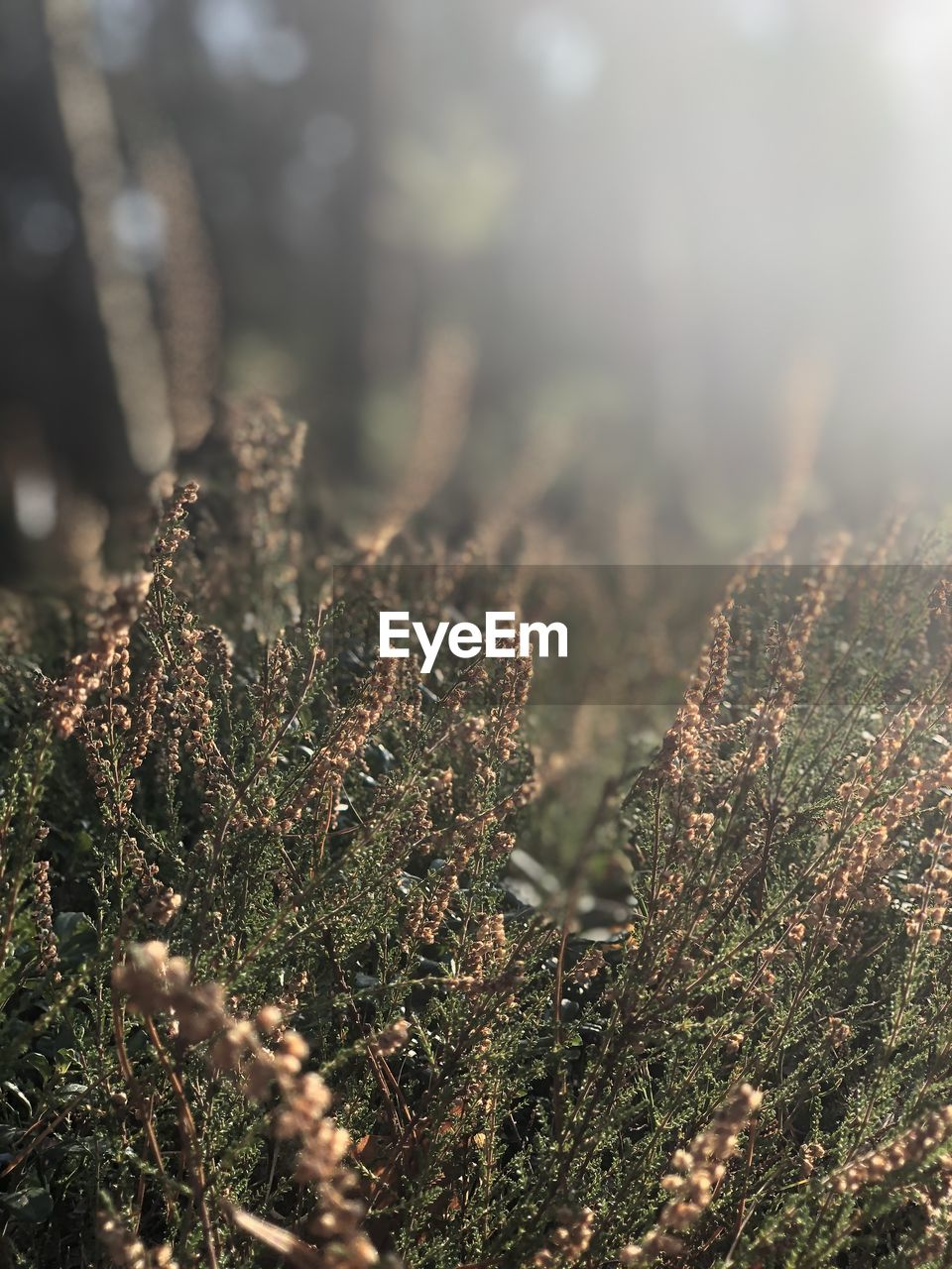 plant, growth, selective focus, nature, day, land, tranquility, no people, beauty in nature, close-up, sunlight, tree, outdoors, forest, green color, moss, field, focus on foreground, environment, scenics - nature, coniferous tree, fir tree