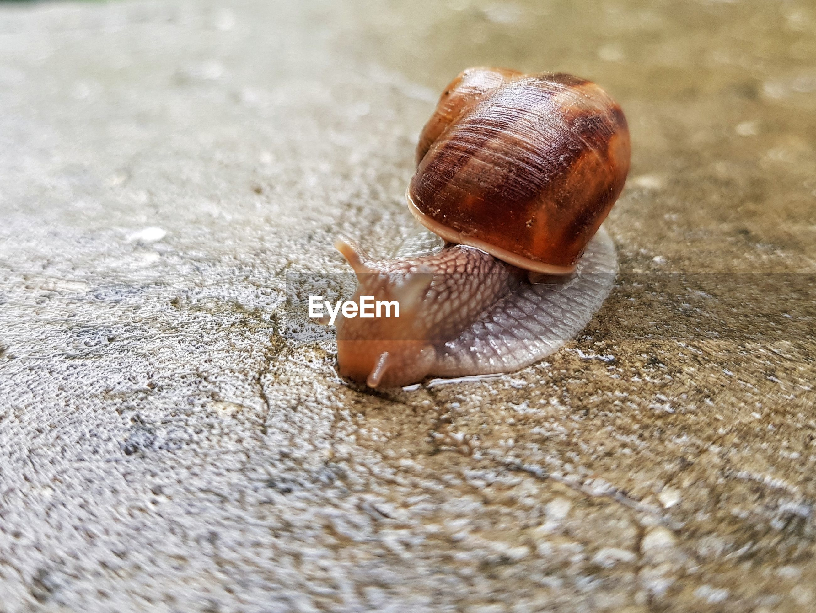 Close-up of snail on wet floor