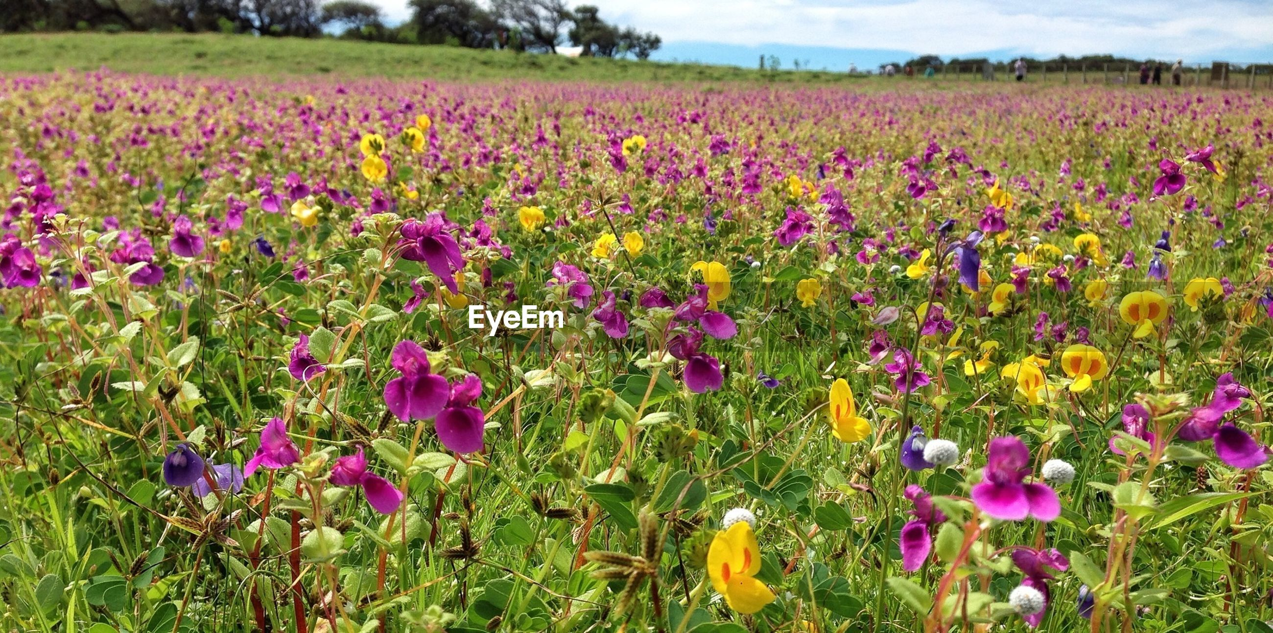View of colorful flowers growing in field