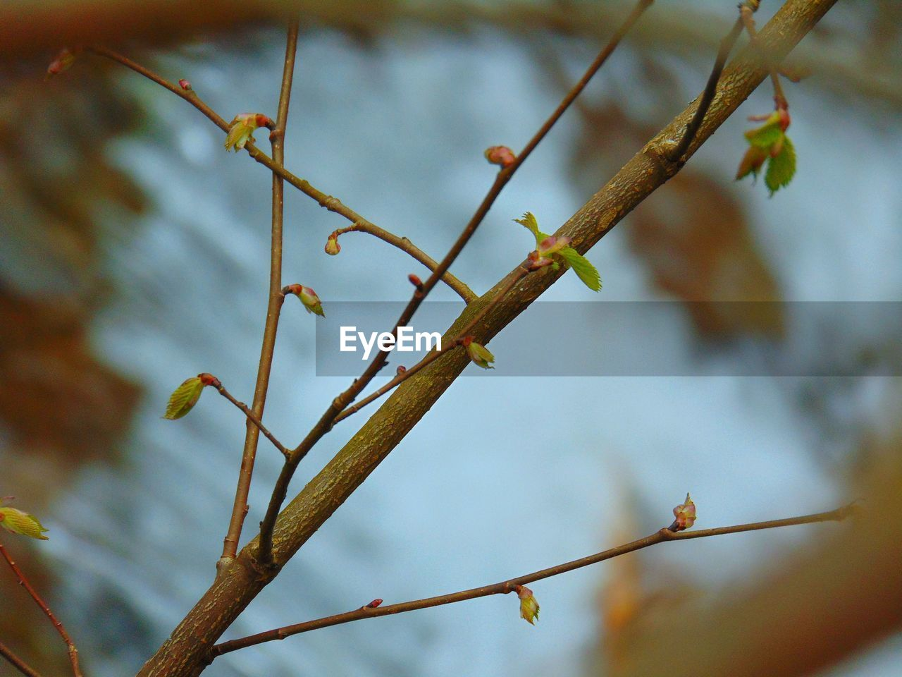 plant, focus on foreground, growth, no people, nature, day, close-up, tree, beauty in nature, branch, tranquility, twig, outdoors, selective focus, plant stem, low angle view, flower, leaf, plant part, beginnings, stick - plant part
