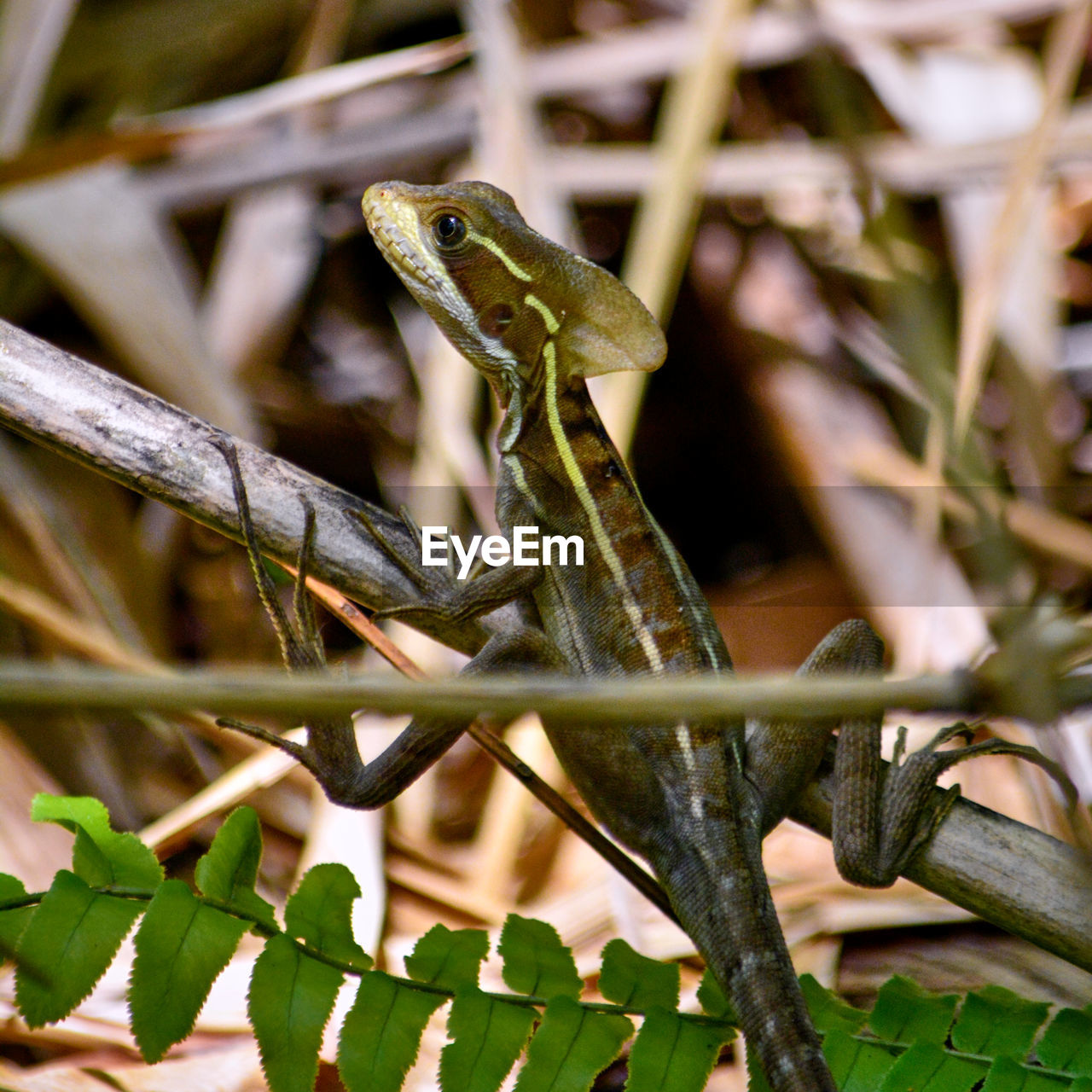 animal themes, animal, animal wildlife, animals in the wild, vertebrate, one animal, plant, reptile, nature, no people, close-up, day, plant part, lizard, selective focus, leaf, branch, focus on foreground, outdoors, tree