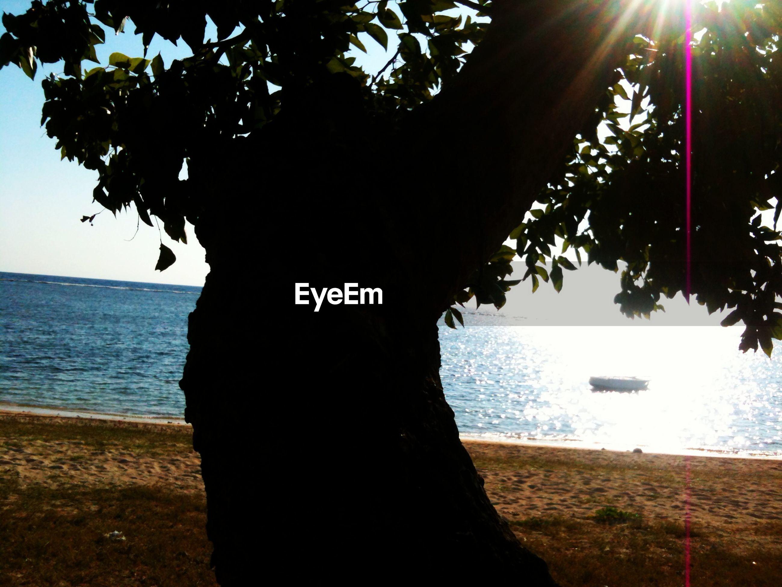 Silhouette tree on beach against clear sky