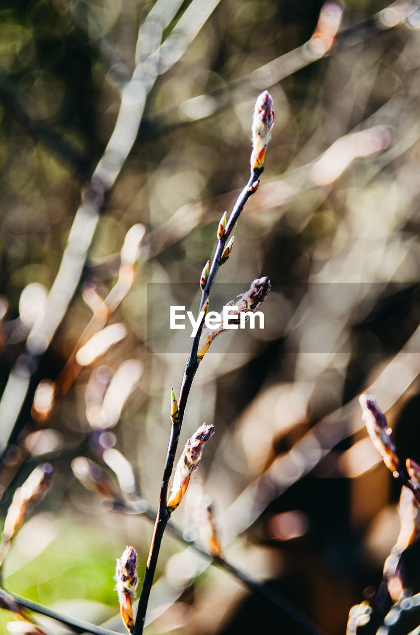 focus on foreground, plant, growth, nature, close-up, day, beauty in nature, no people, outdoors, fragility, vulnerability, flower, sunlight, twig, tree, selective focus, flowering plant, plant stem, branch, bud