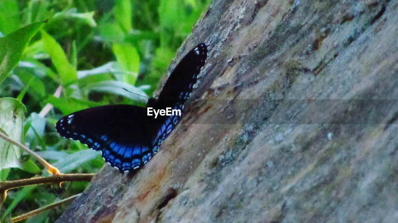 one animal, animal, animal themes, animals in the wild, animal wildlife, close-up, plant, invertebrate, no people, nature, tree, insect, butterfly - insect, day, animal wing, outdoors, beauty in nature, green color, selective focus, animal body part, butterfly