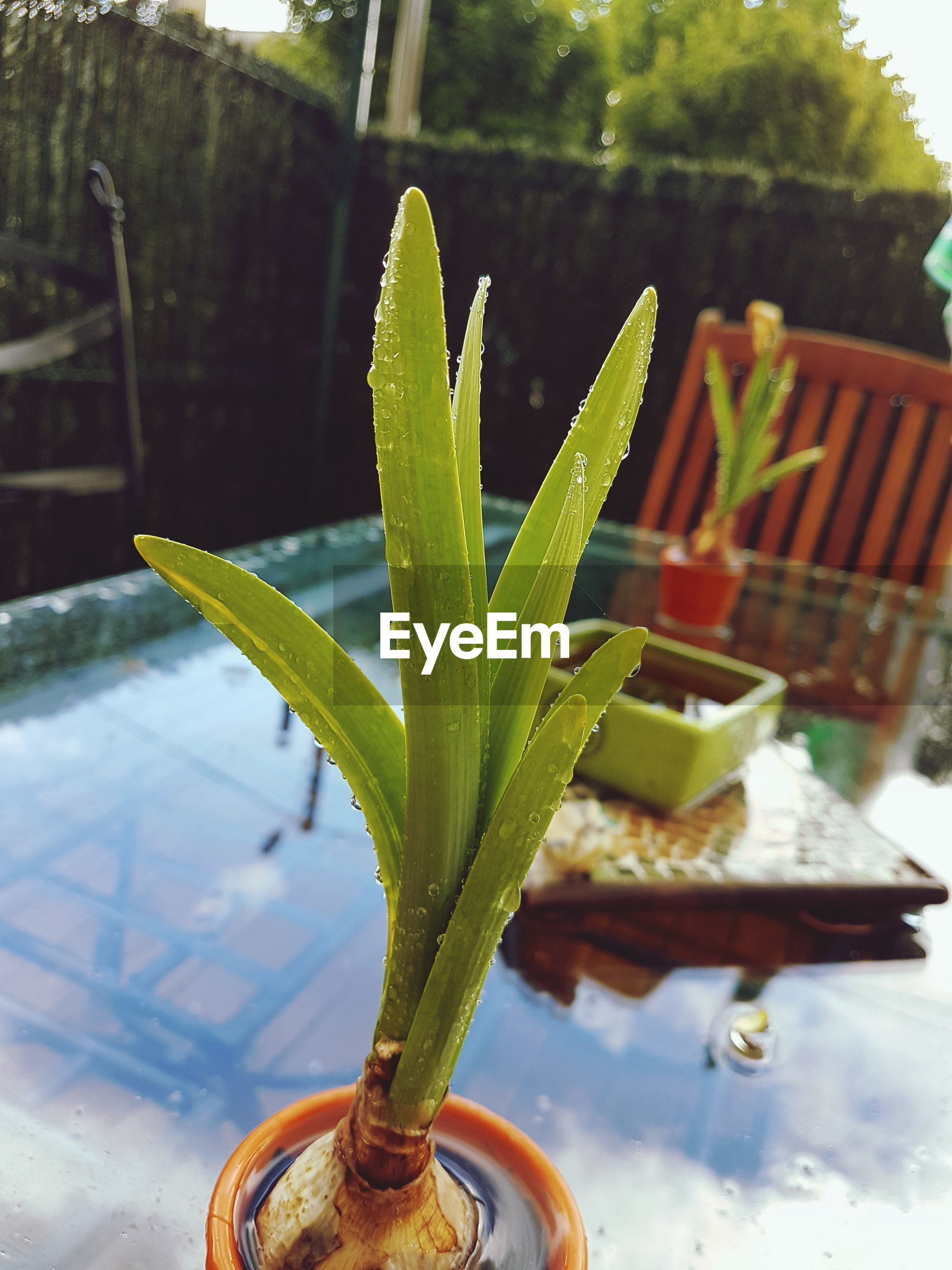 growth, plant, green color, aloe vera plant, potted plant, no people, day, nature, close-up, outdoors, beauty in nature, freshness