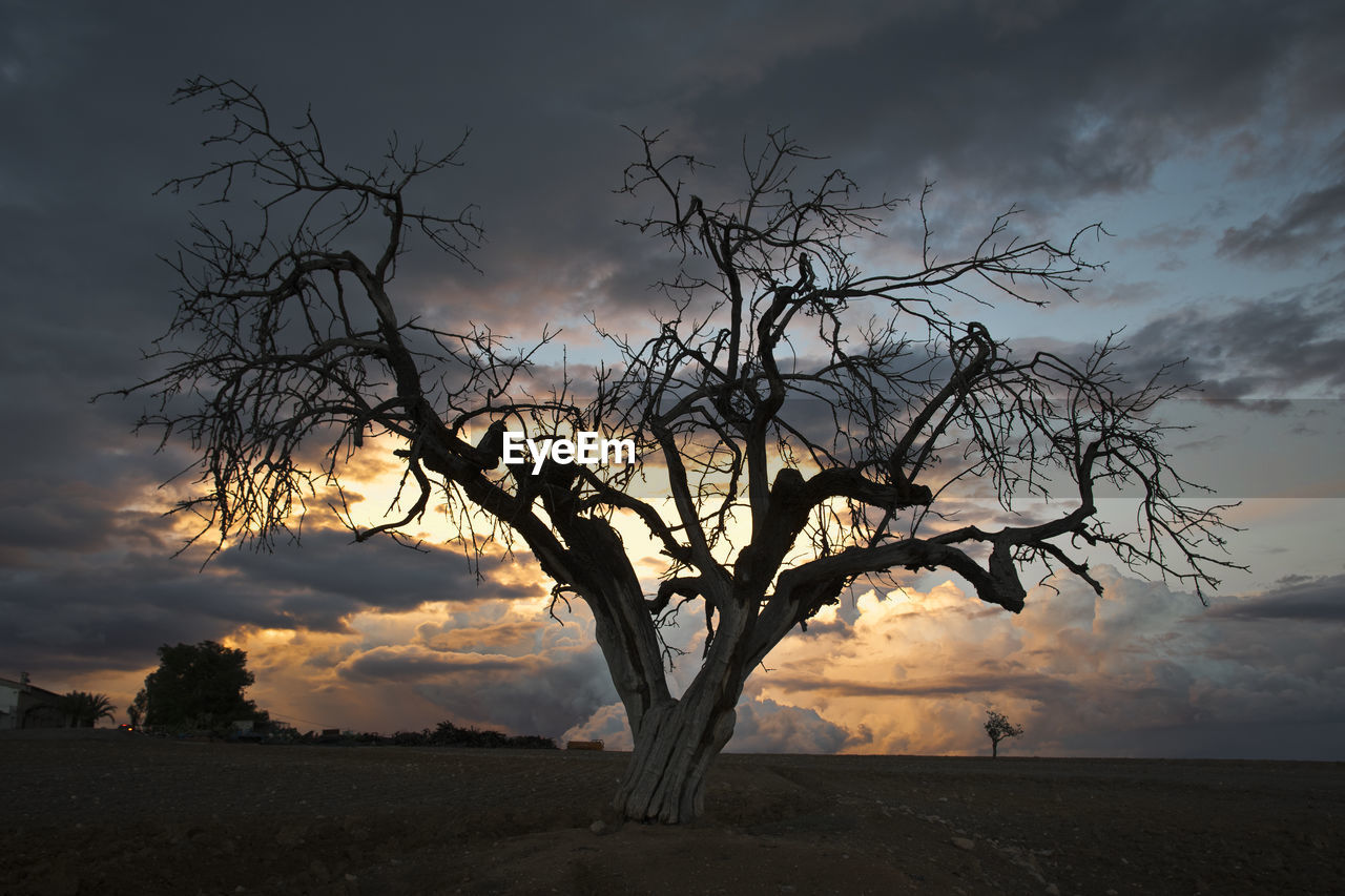 Bare Tree Against Dramatic Sky
