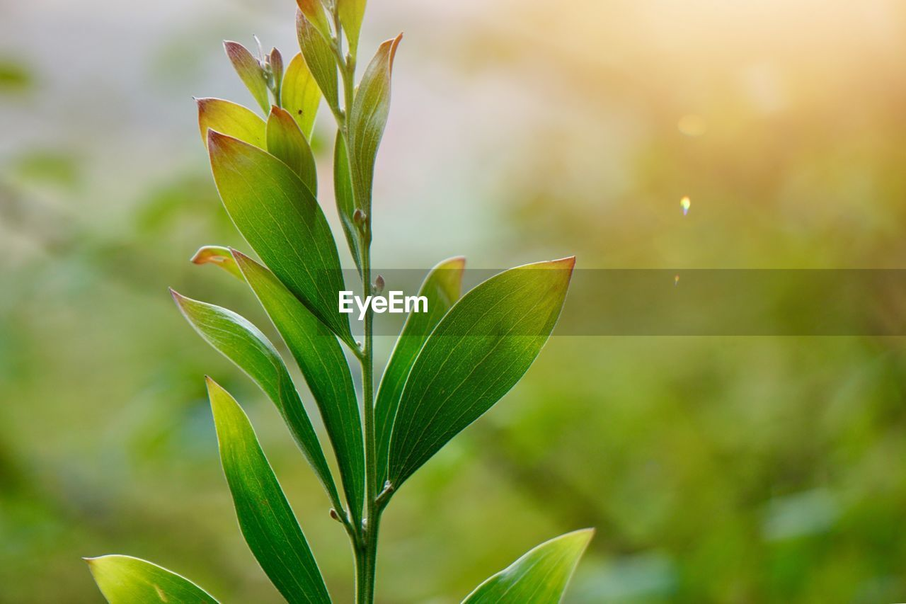 growth, plant, leaf, plant part, green color, focus on foreground, close-up, beauty in nature, no people, nature, day, outdoors, fragility, tranquility, vulnerability, freshness, selective focus, beginnings, sunlight, botany