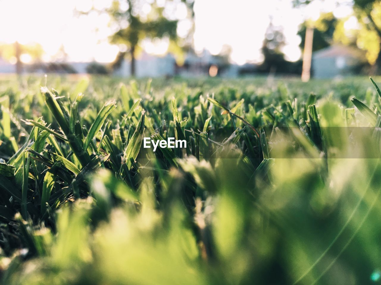 selective focus, growth, nature, grass, no people, field, plant, green color, outdoors, day, close-up, beauty in nature, freshness